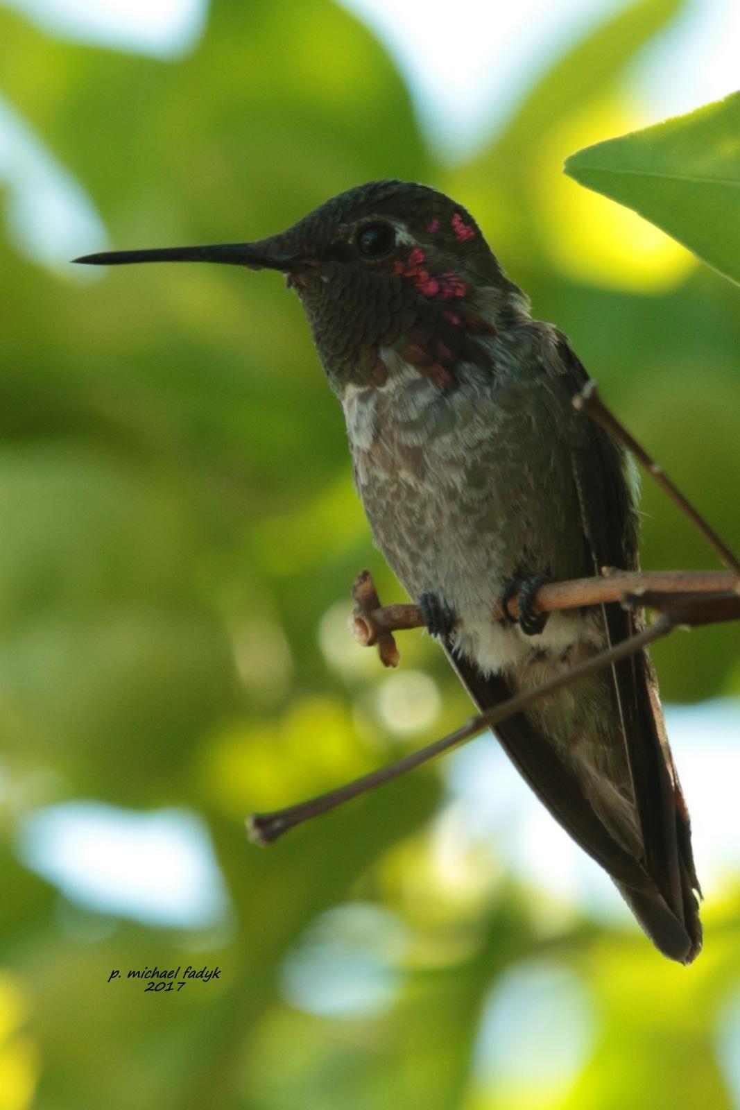 BIRD! by P. Michael Fadyk