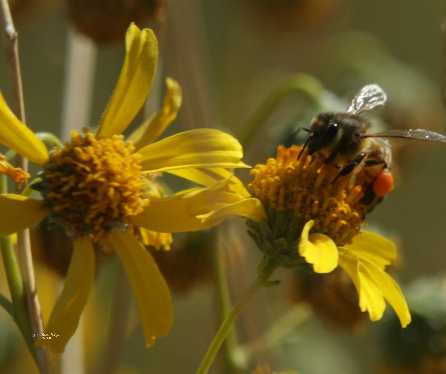 buzz 7 by P. Michael Fadyk