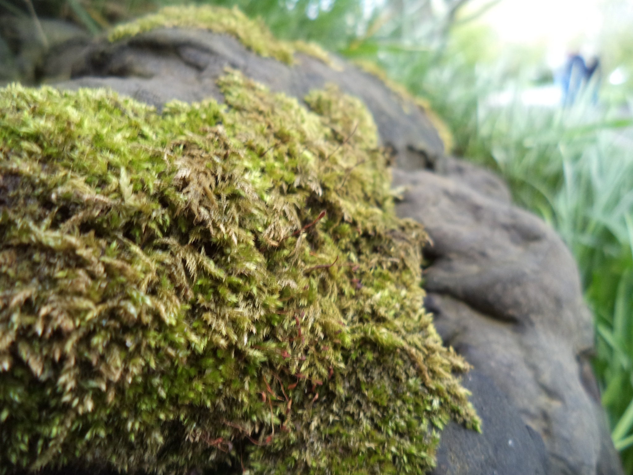 Some people take a picture of the tree, me I take it of the moss #Thelittlethings by Carlo McNicholl