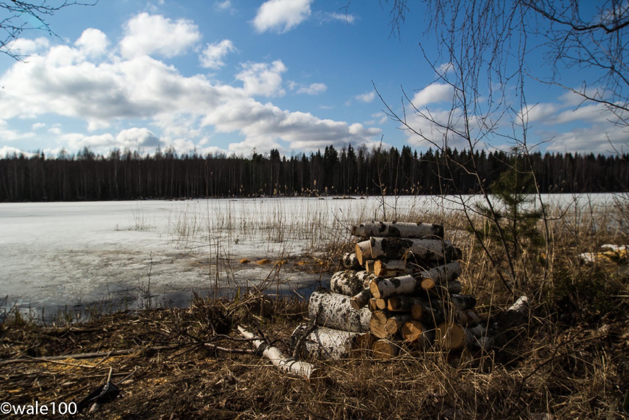Logs by a frozen lake by wale