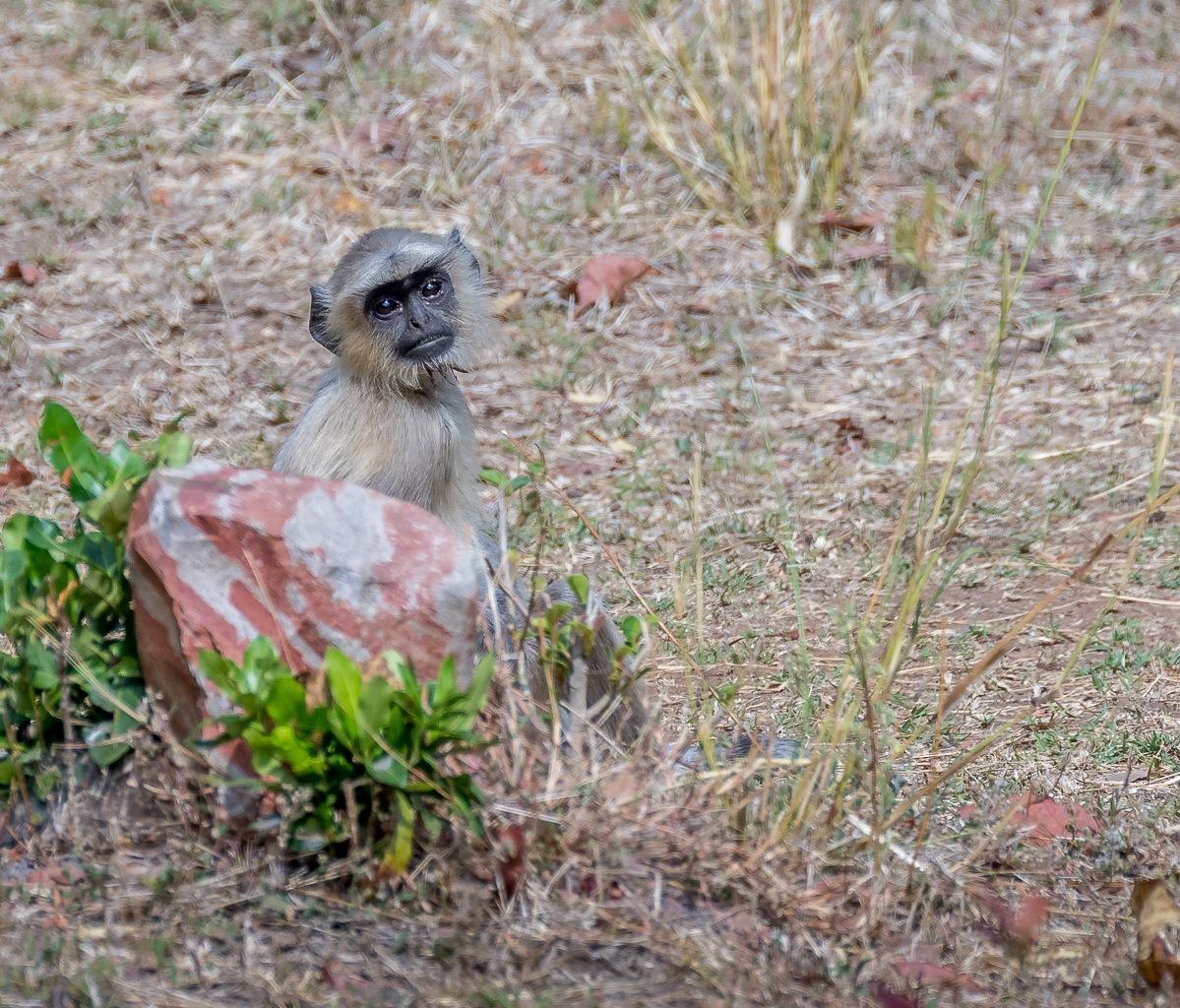 The Monkey Day by Kim Jonsson