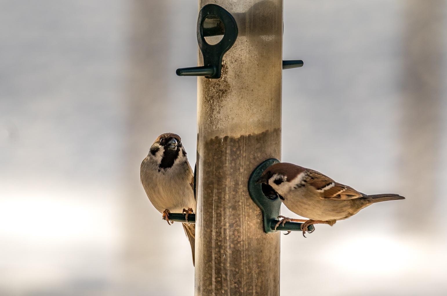 Birds.... by Kim Jonsson