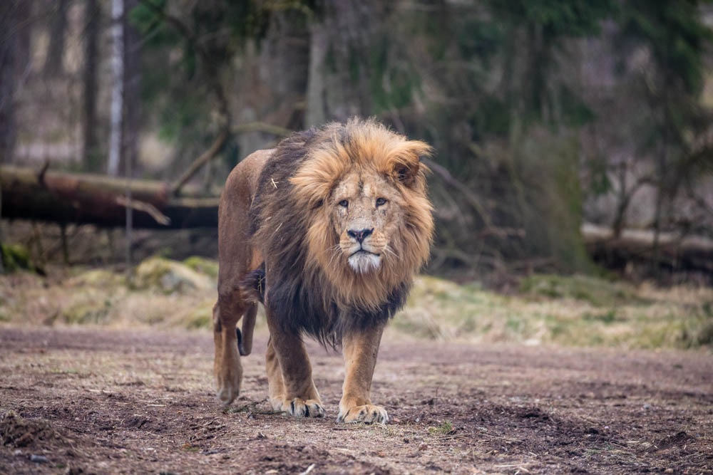 The King of kings... by Kim Jonsson