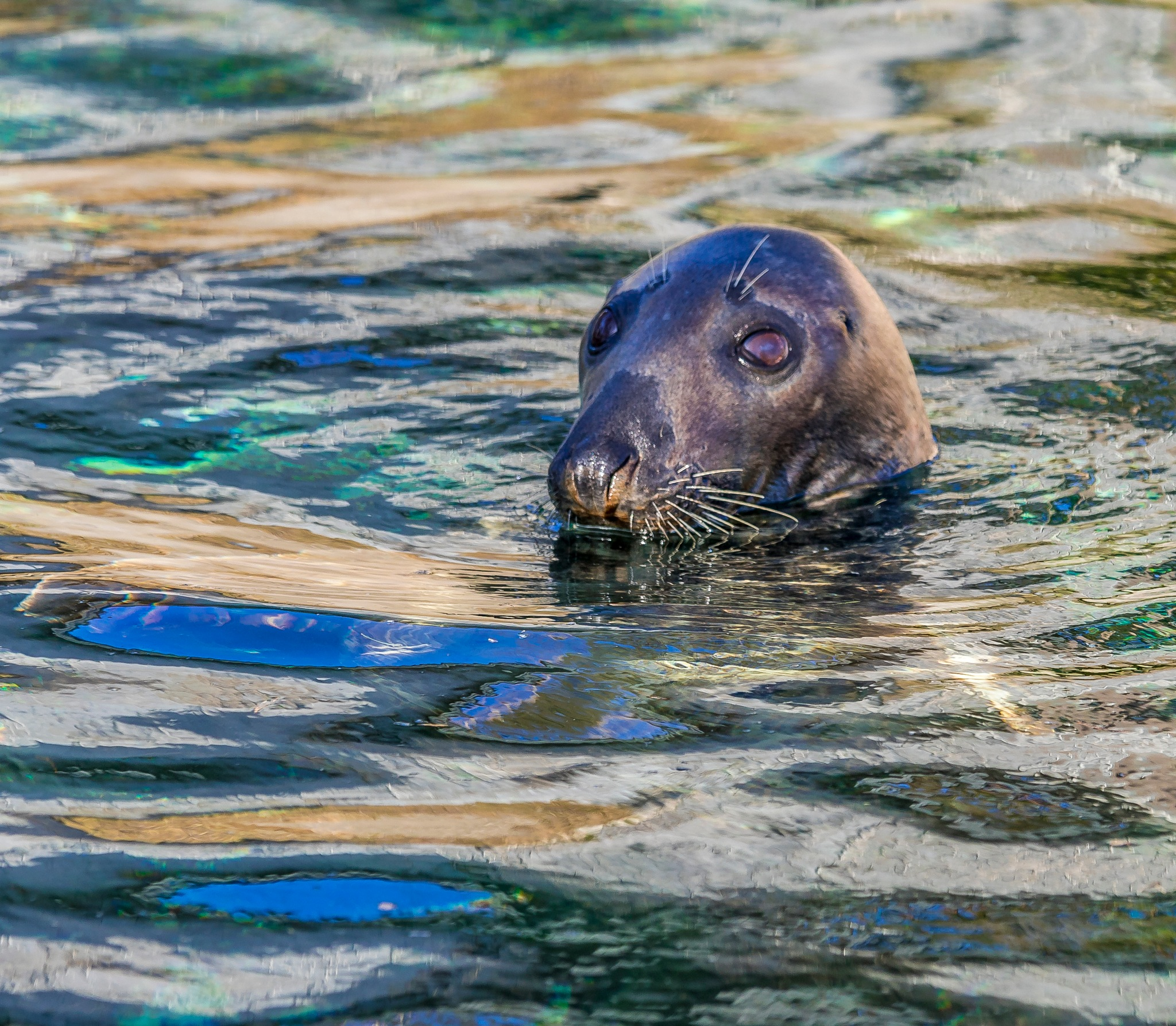 The Happy Seal by Kim Jonsson