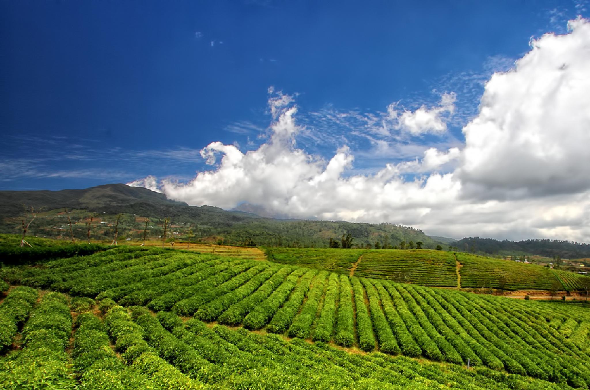 tea by yanuarakbar