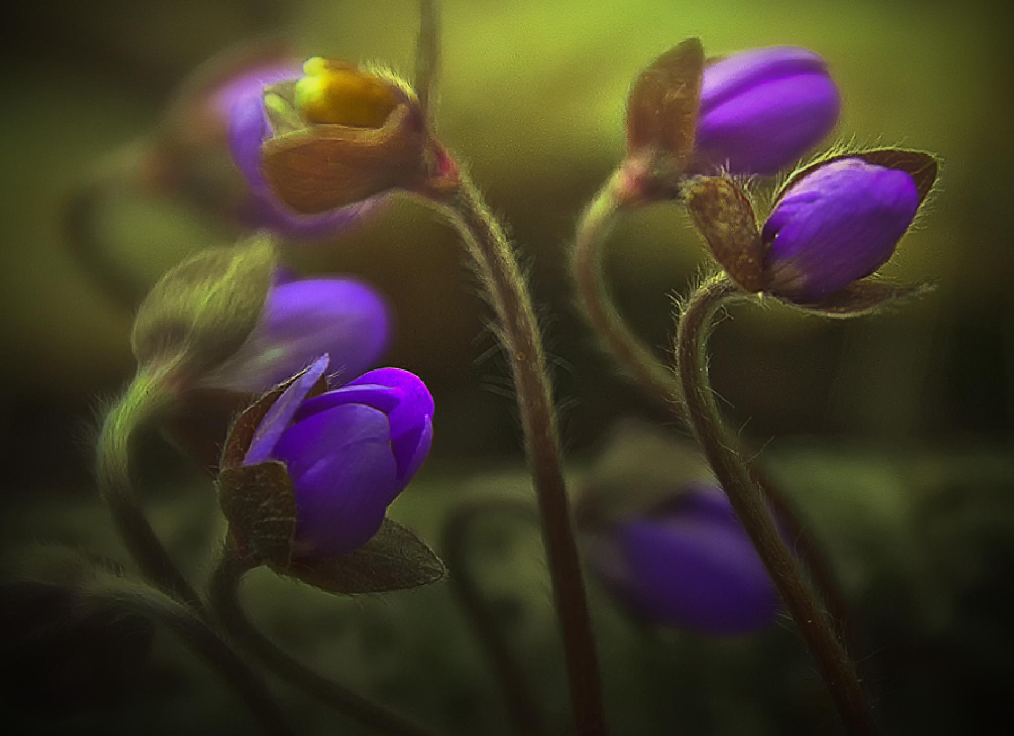 Spring ! by urveurve