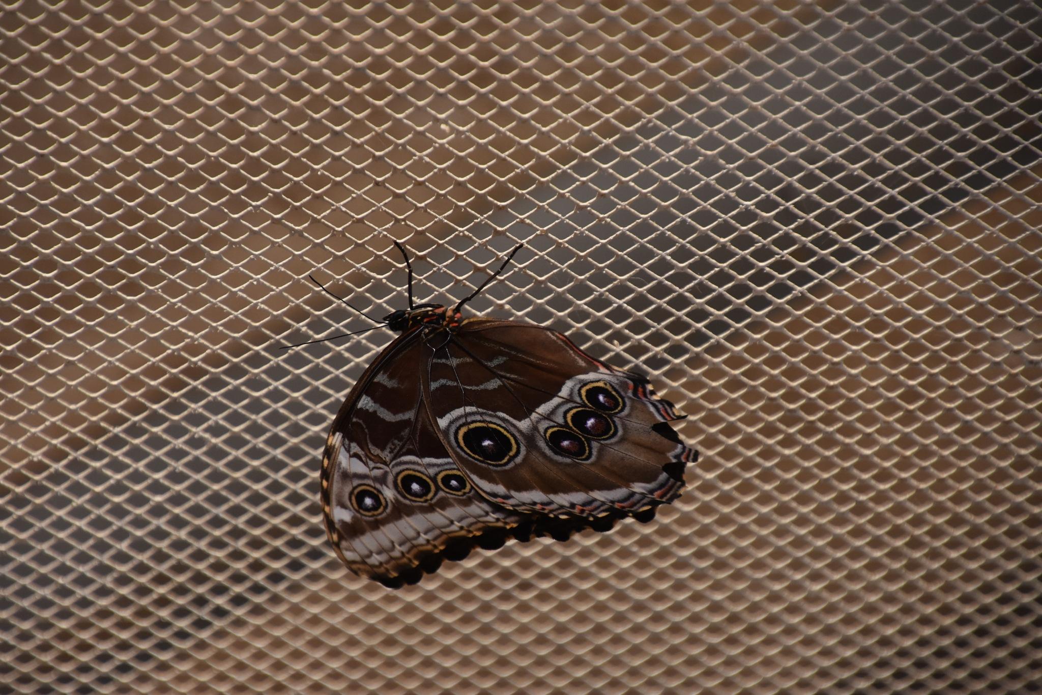 Schmetterling 01 by Michael Kraemer