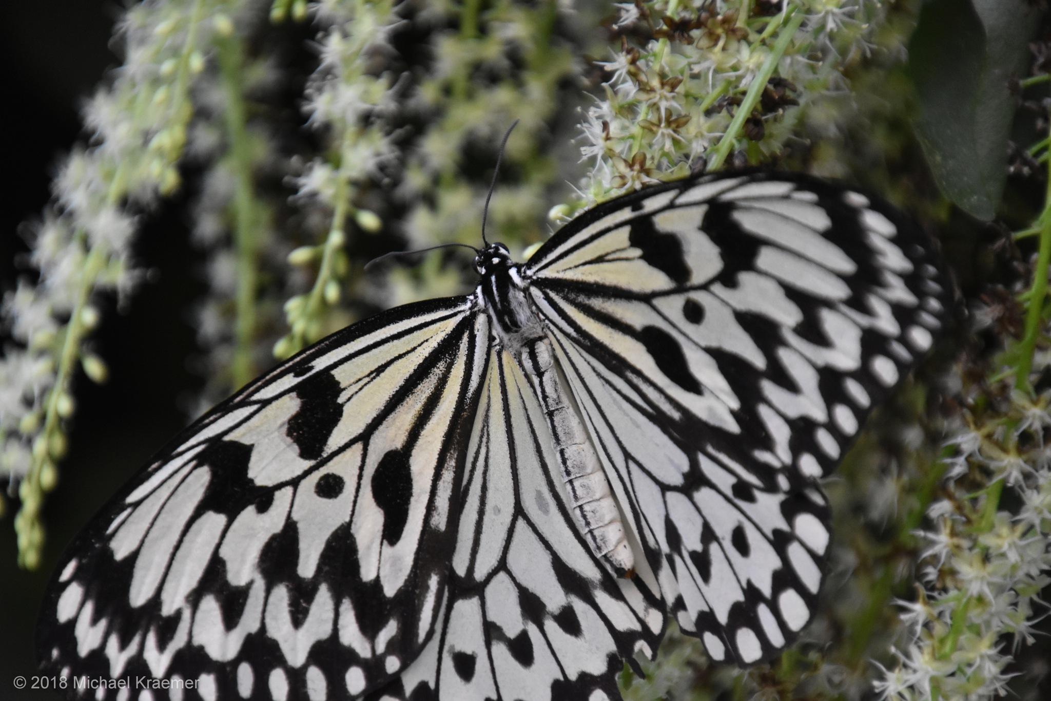Schmetterling - 06 by Michael Kraemer