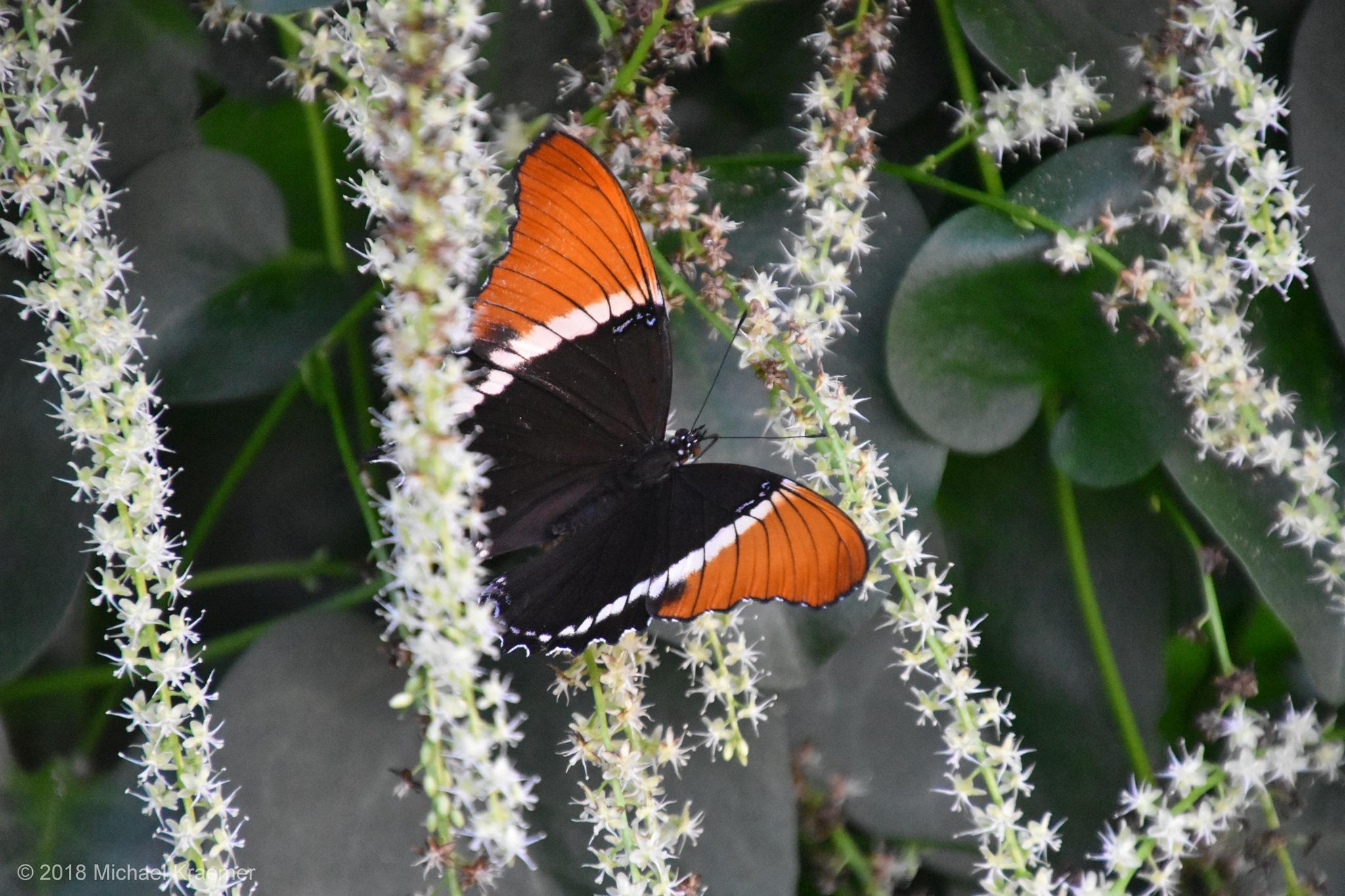 Schmetterling - 08 by Michael Kraemer