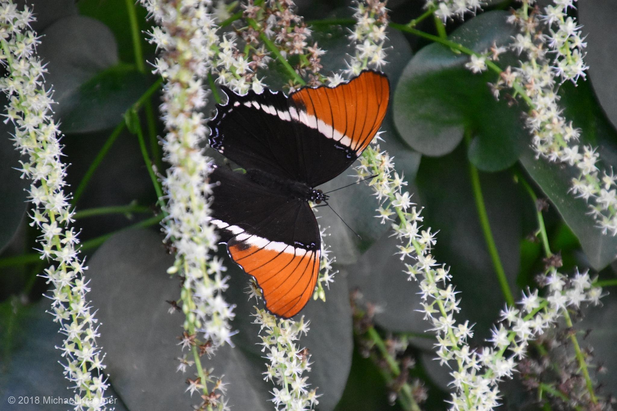 Schmetterling - 07 by Michael Kraemer