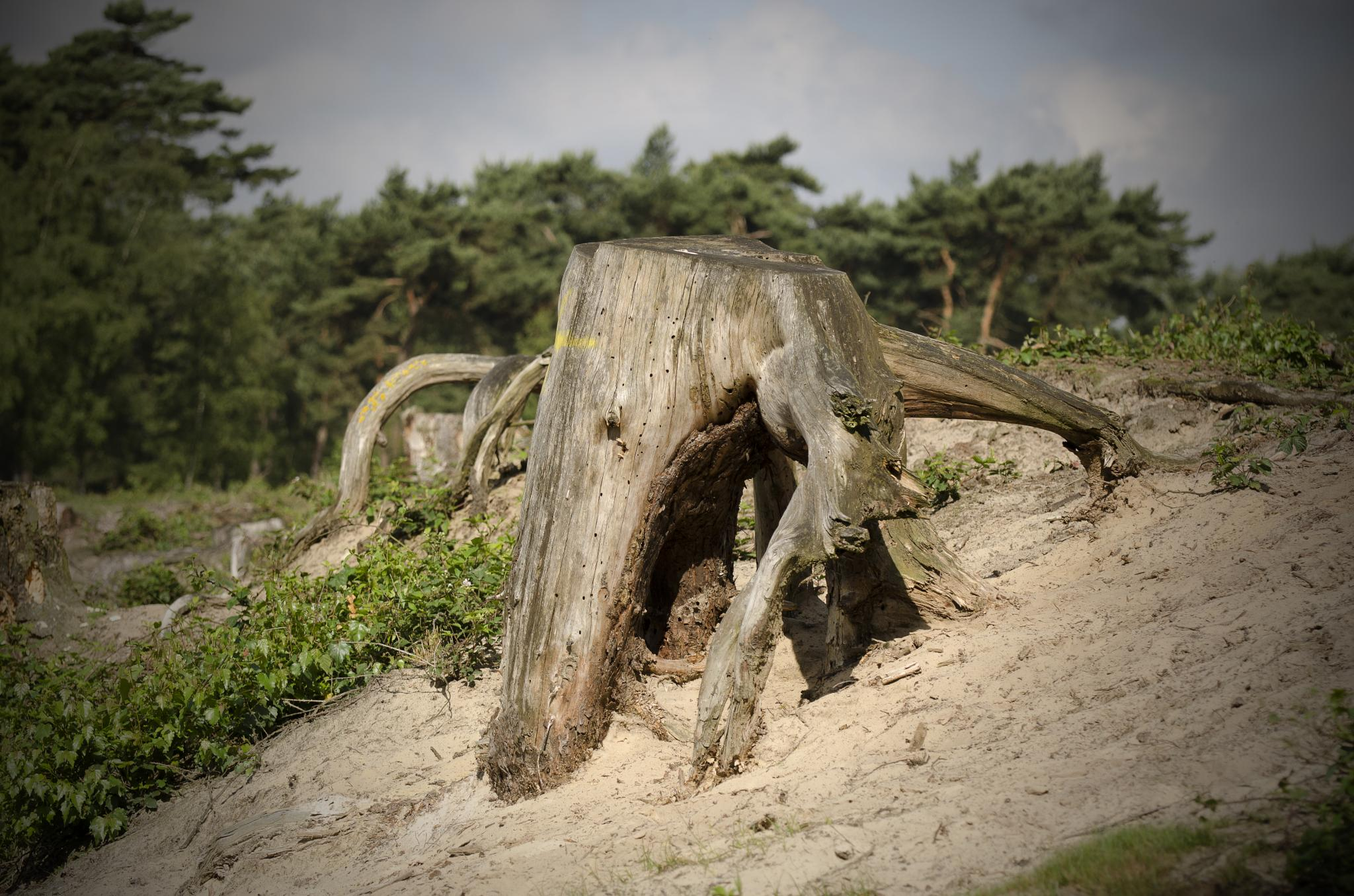 Photo in Random #tree roots #sand #huge #nature #spider