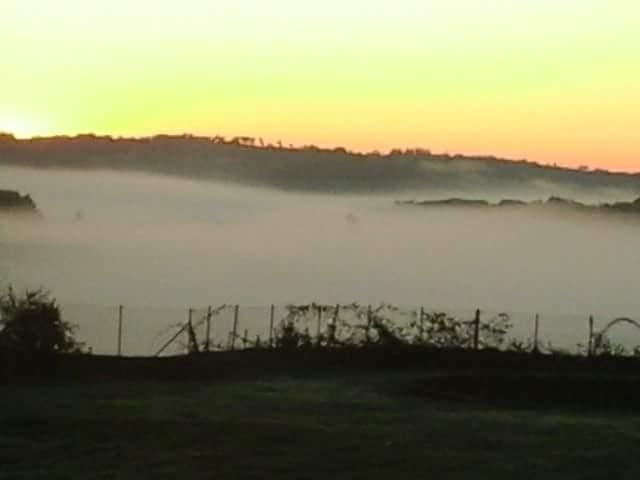Morning fog by Inez