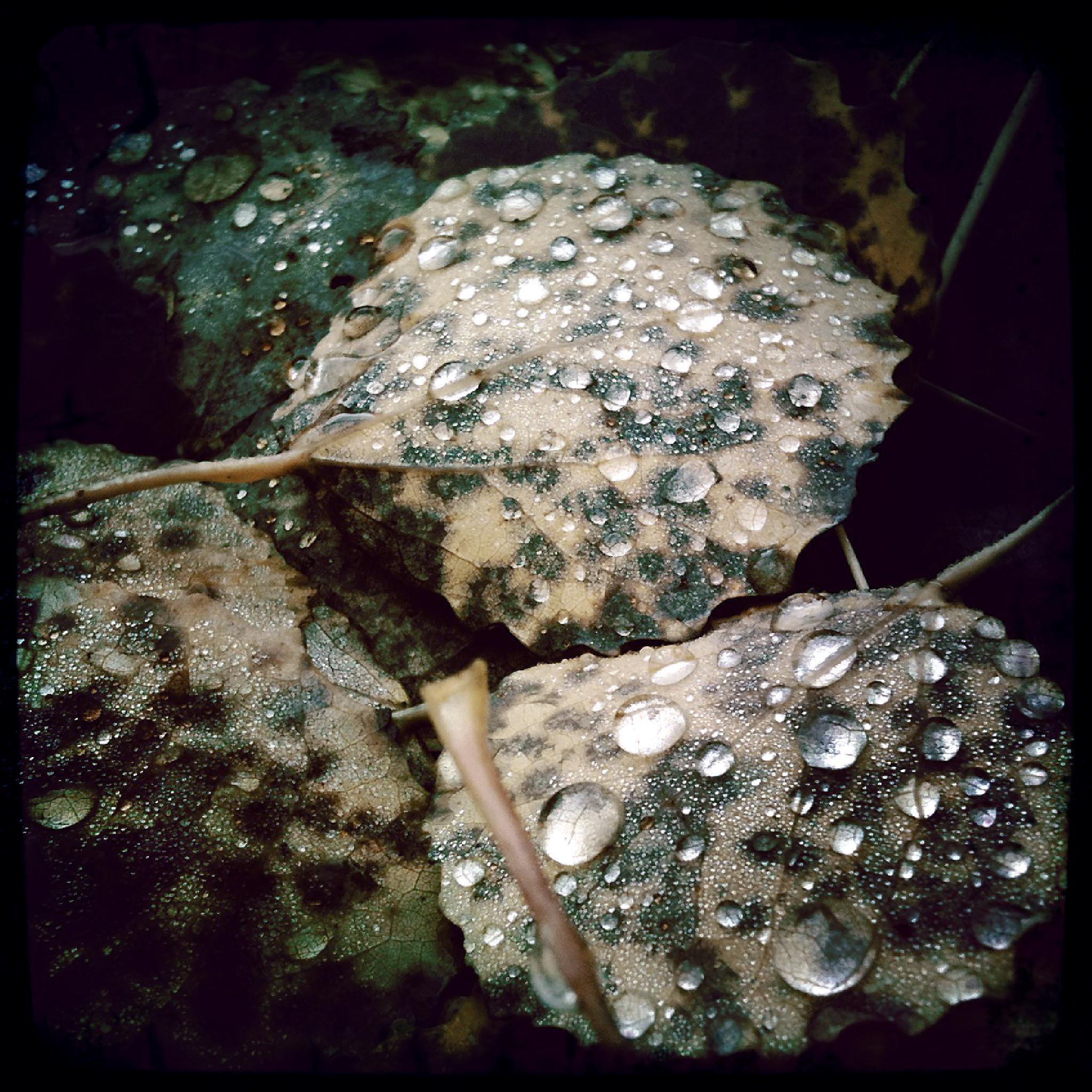 Autumn leaves by MlleVivien