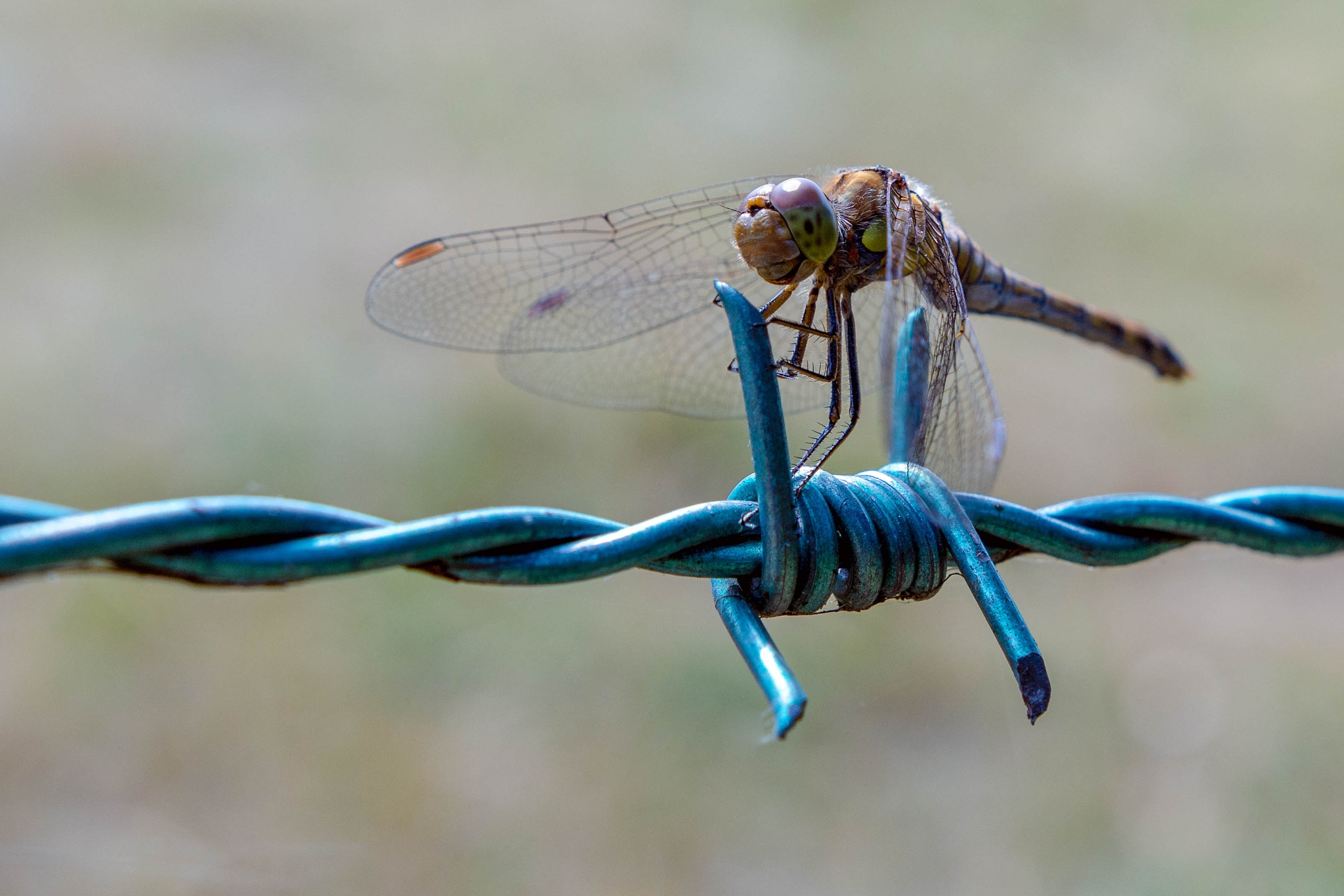 Dragonfly by kevin.wood.359126