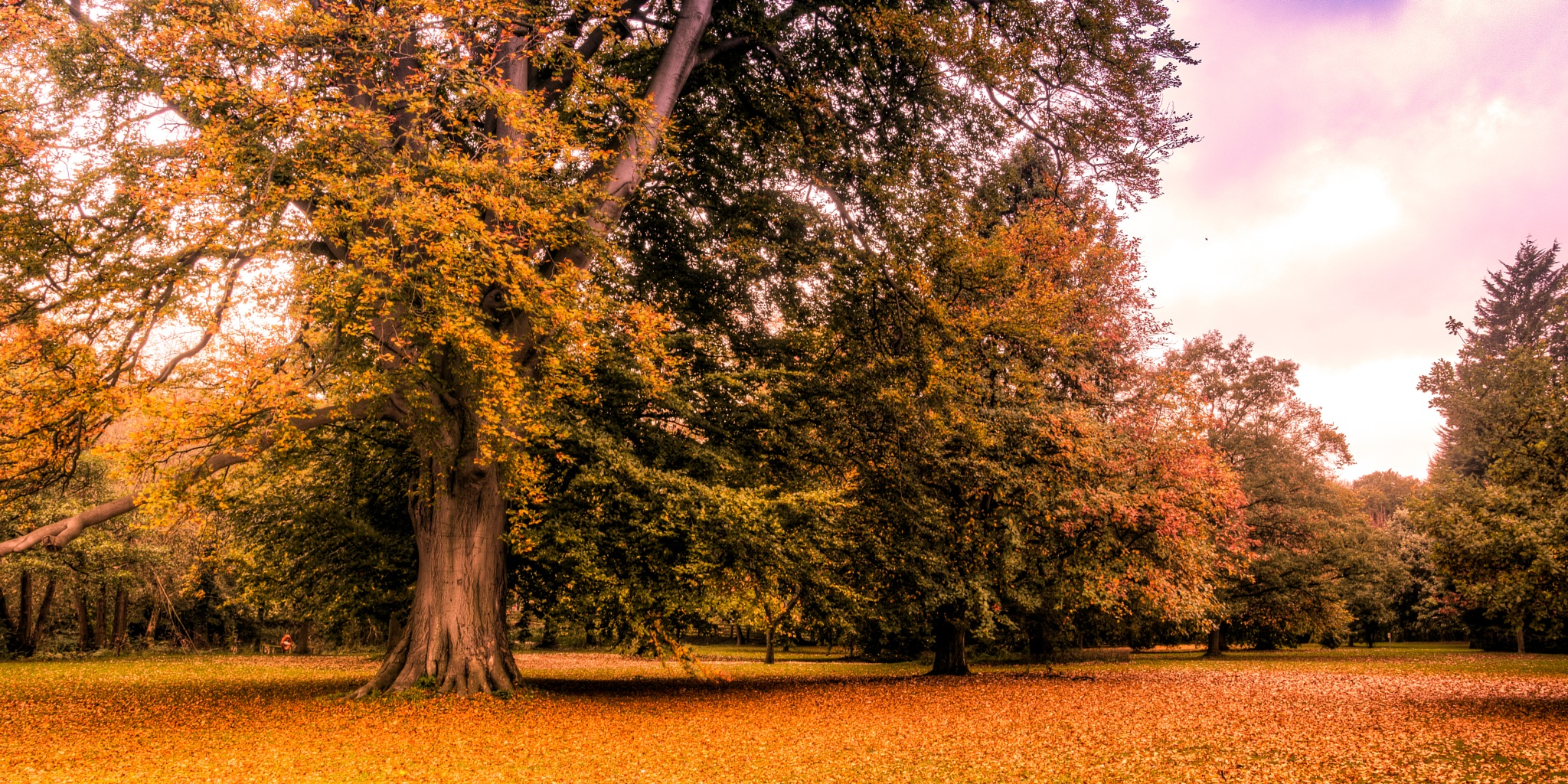 Autumn by kevin.wood.359126