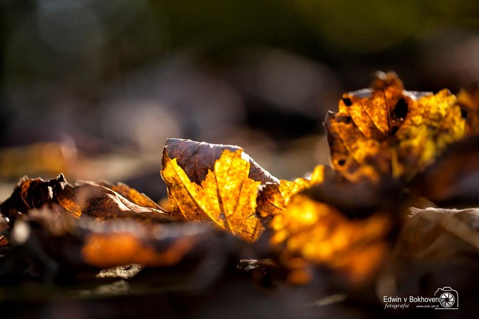 Herfst by edwin.vanbokhoven