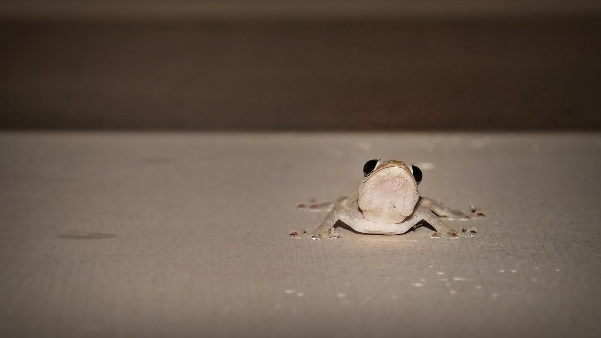Lizard  by tasnim momit