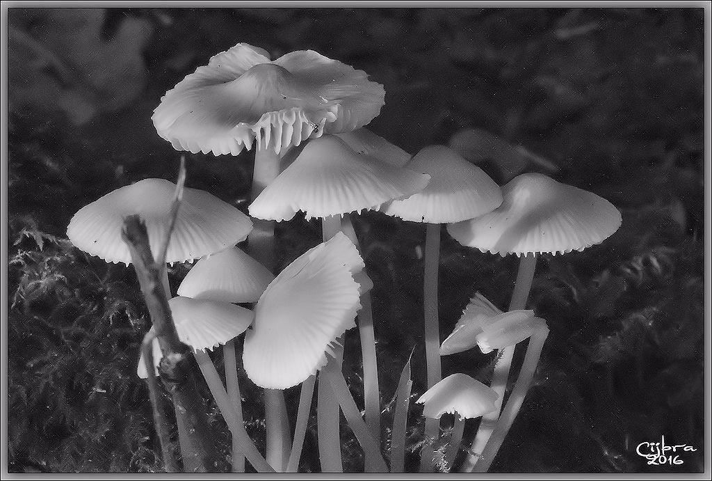 mushrooms by Cijbra