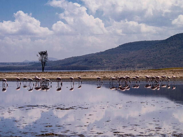Lake Nakuru. Kenya  by behankieran