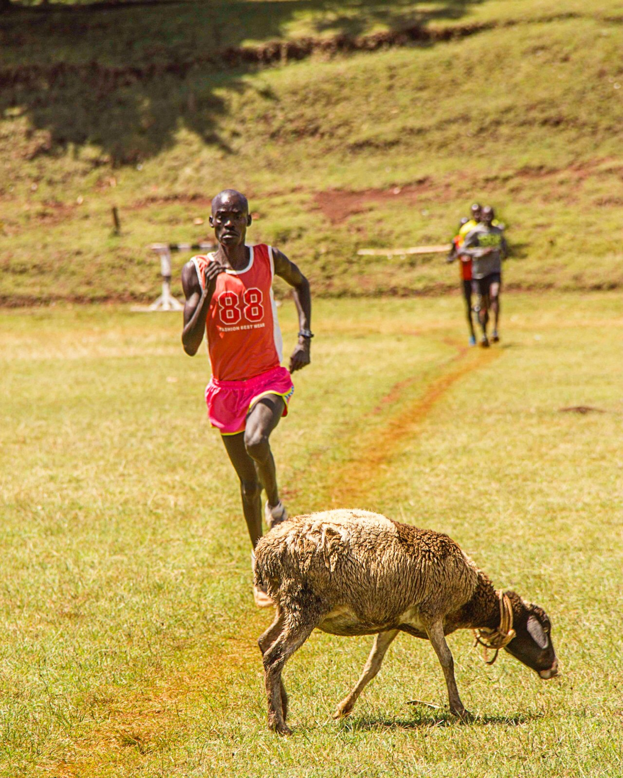 Training athlete. Kamariny stadium. Iten. Kenya by behankieran