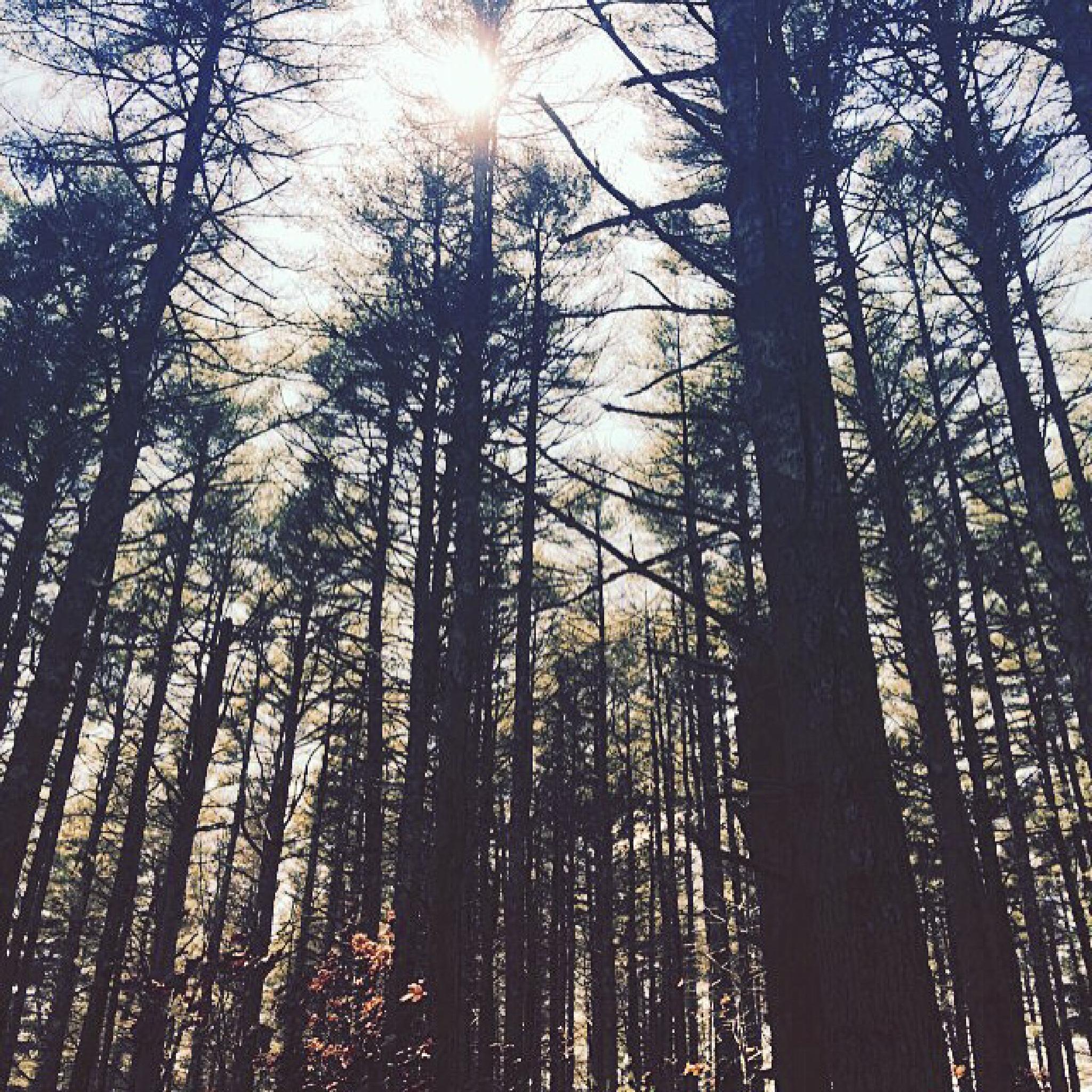 walk in the woods by Rhonda