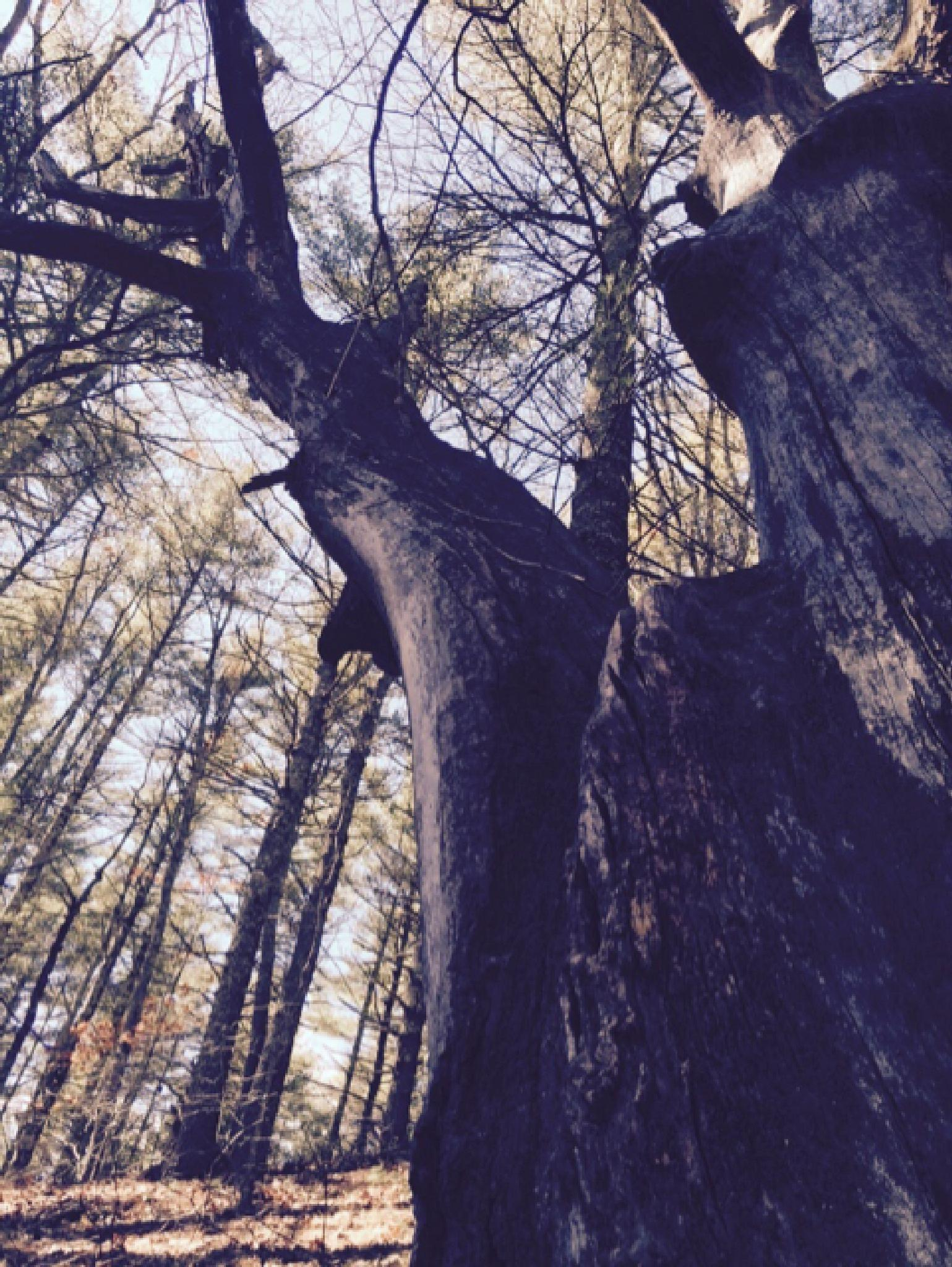 looking up in the woods by Rhonda