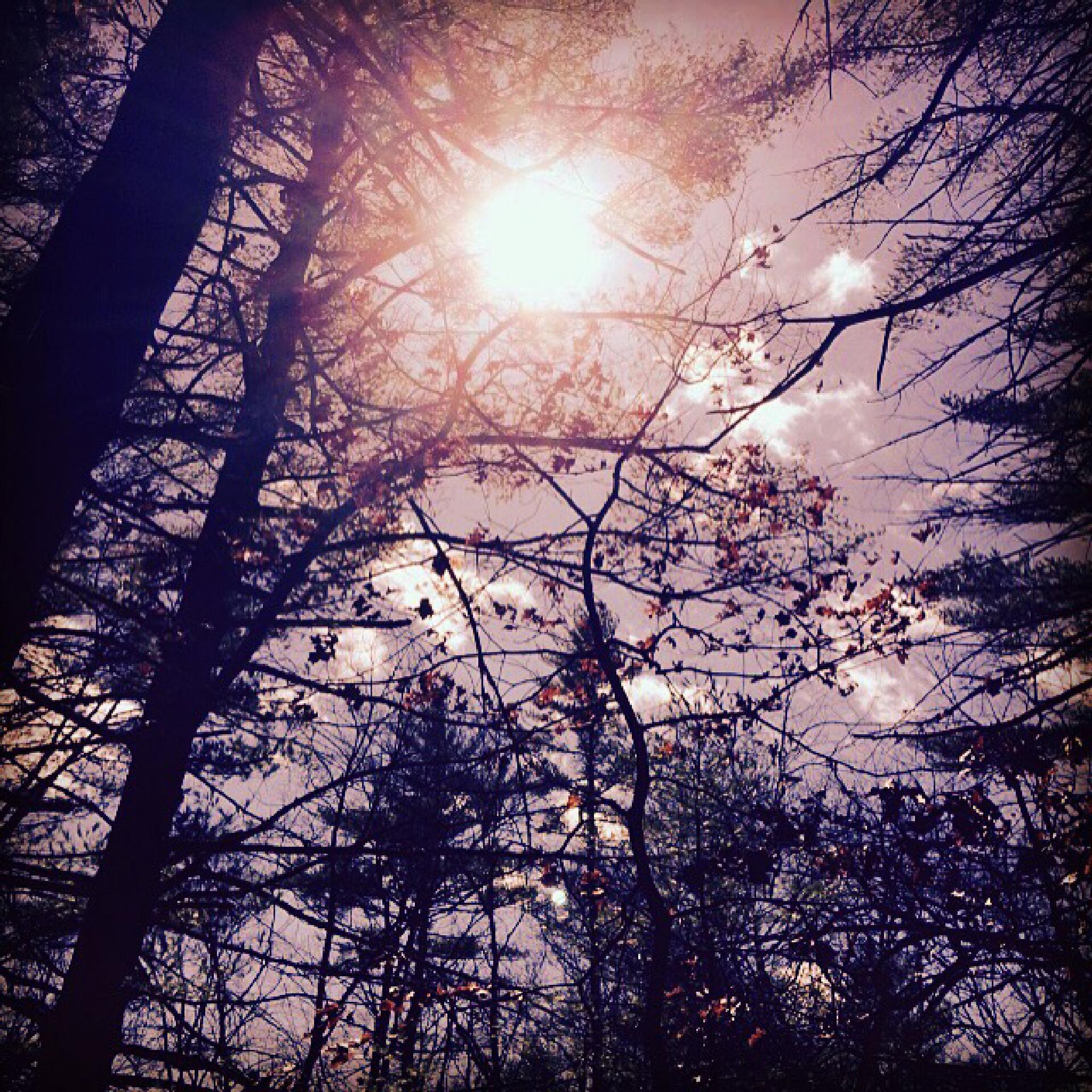 IMG_1194 by Rhonda