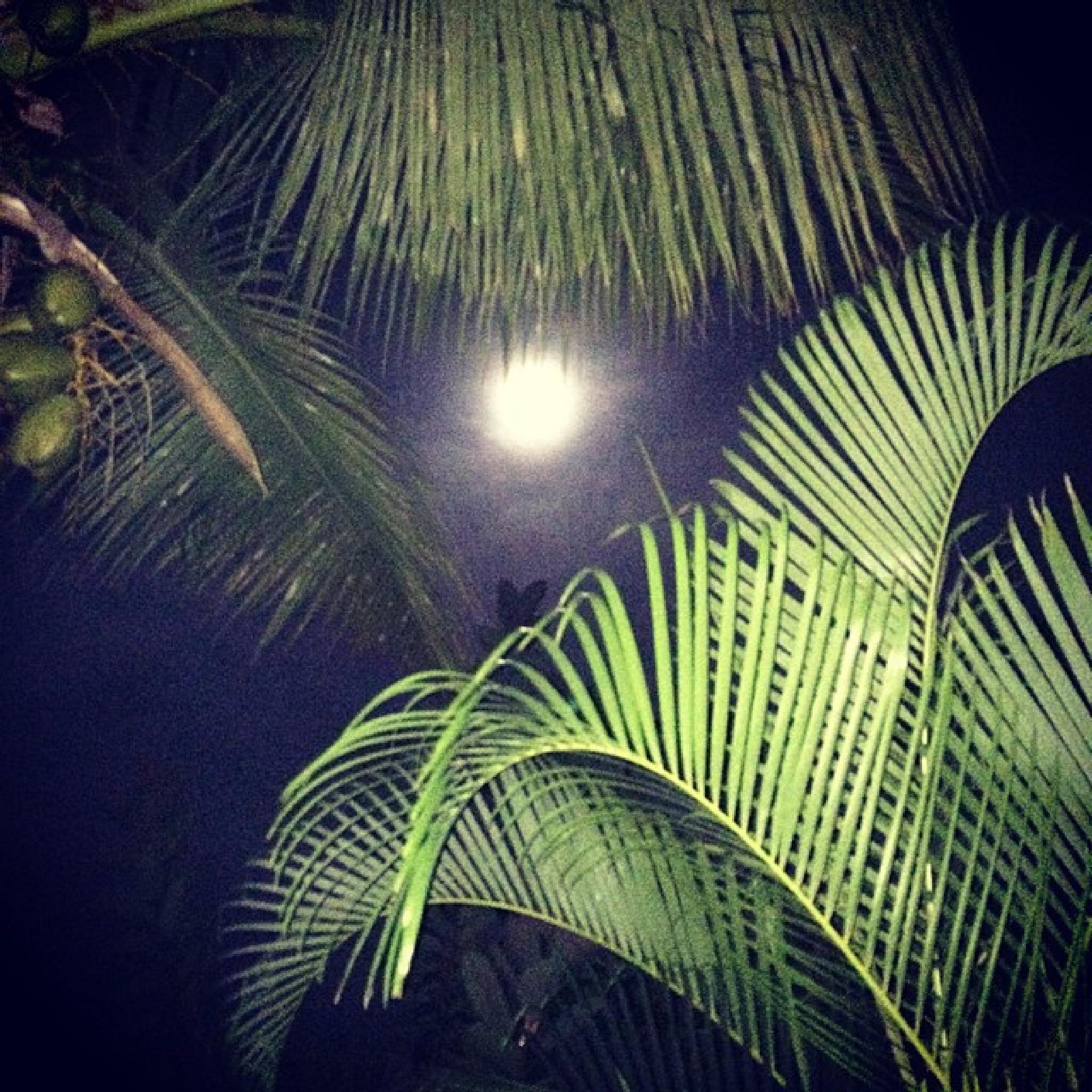 Palm tree moon by Rhonda