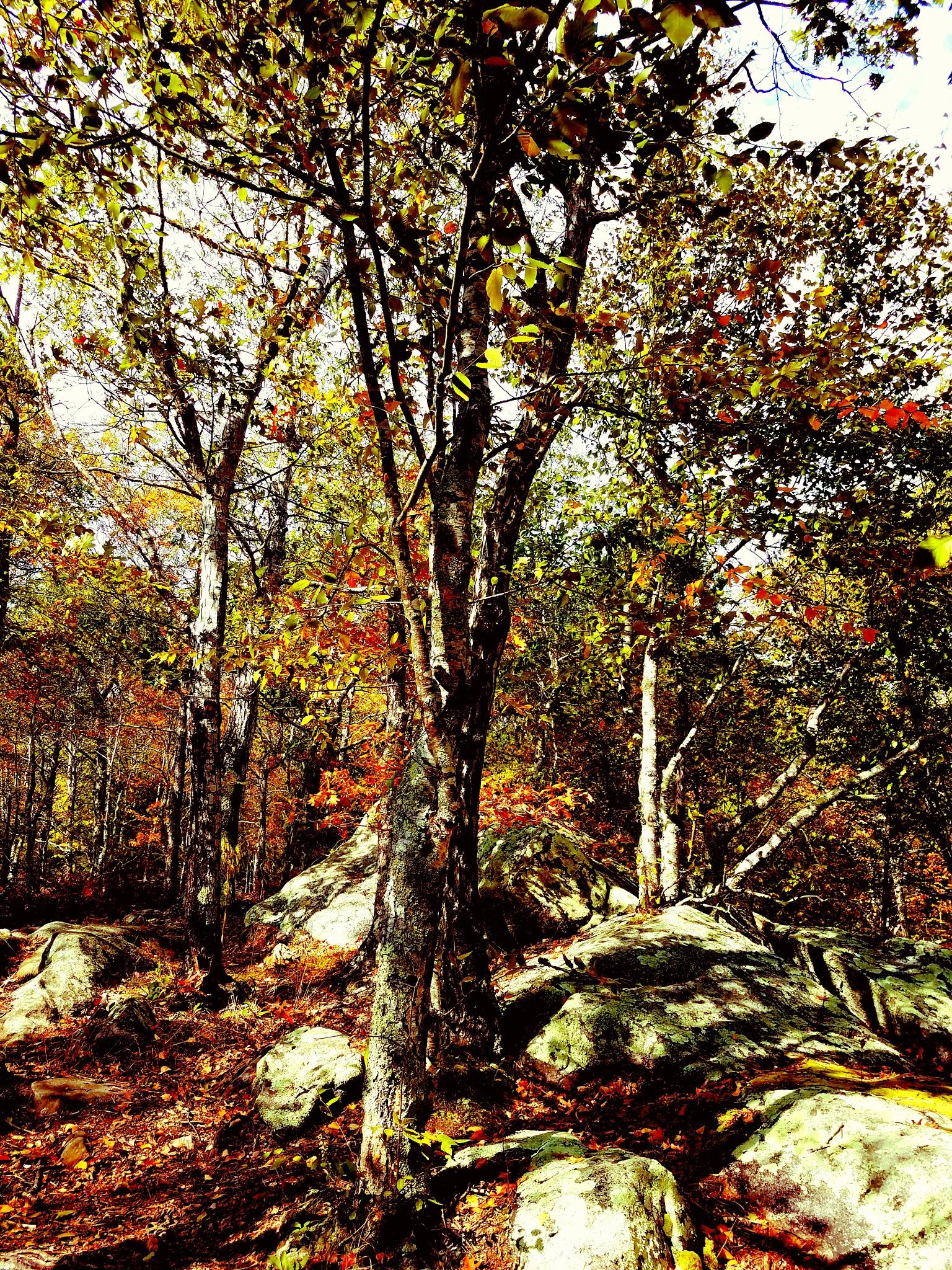 Woods by Rhonda