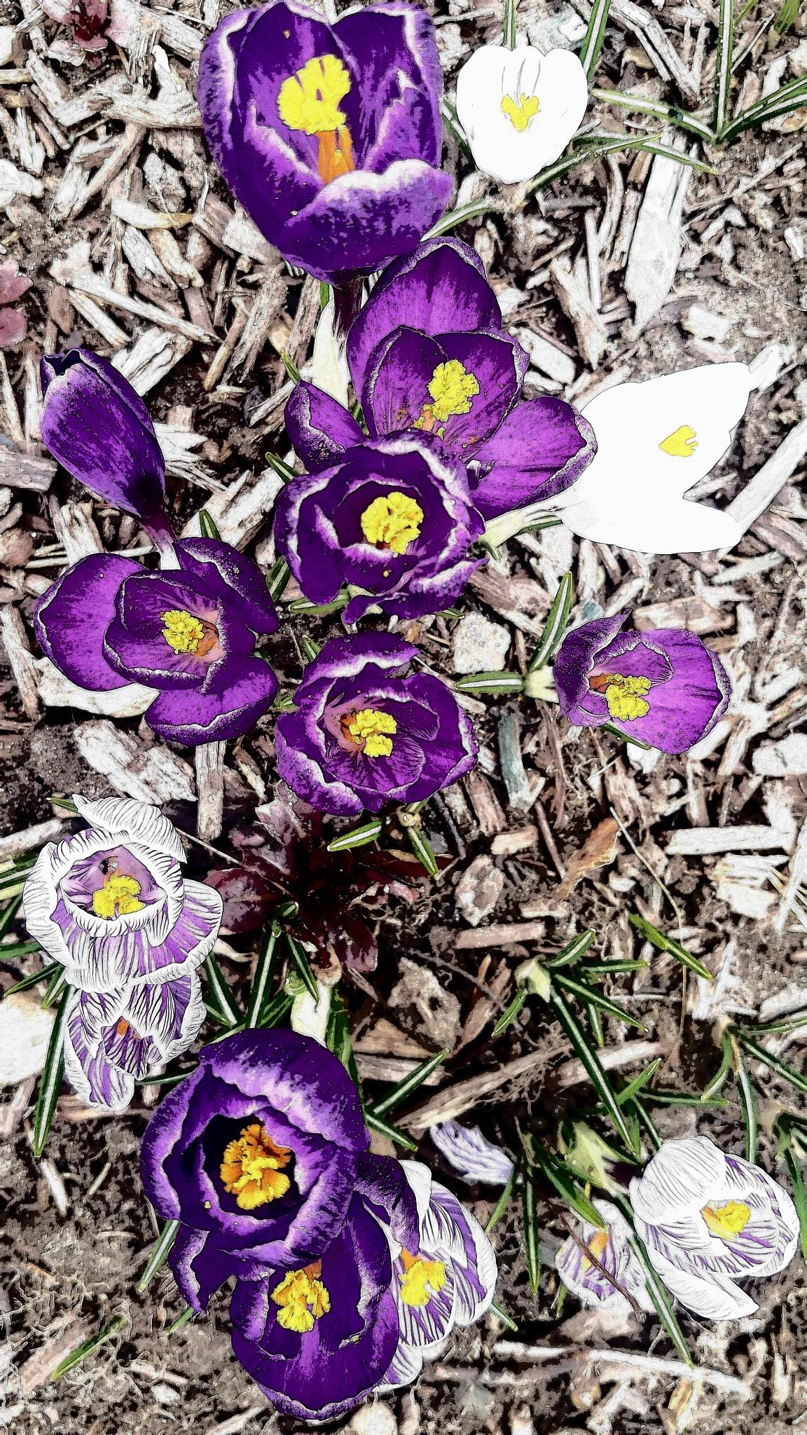Springs first blooms  by Rhonda
