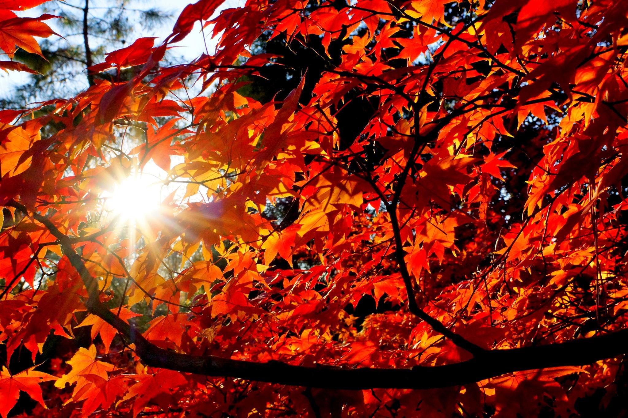 Autumn Sun by Gibbsgirl11