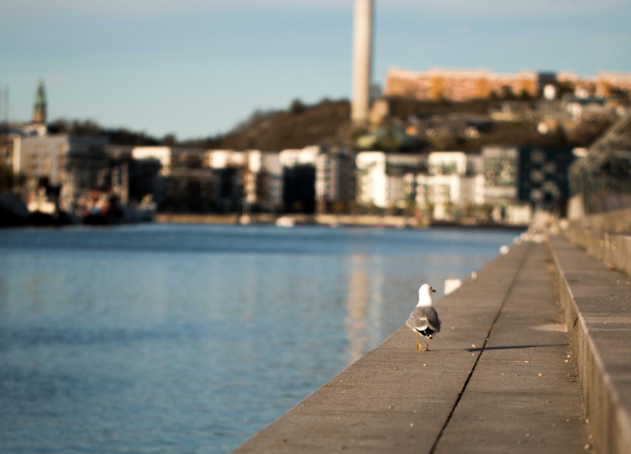 Walking Seagull by Dag Thönnersten
