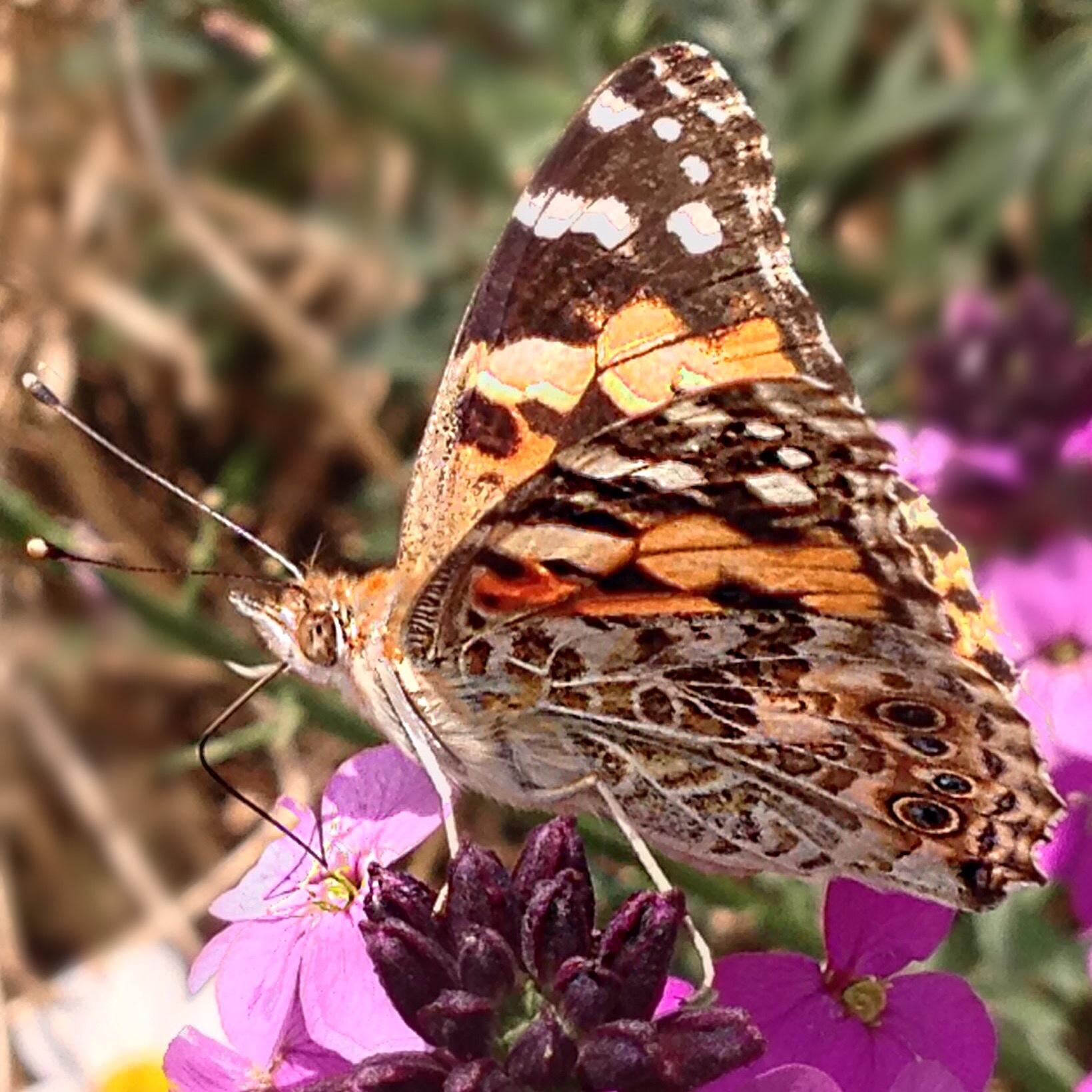 Photo in Random #delicate #wings #beauty #pollen #flowers #summer