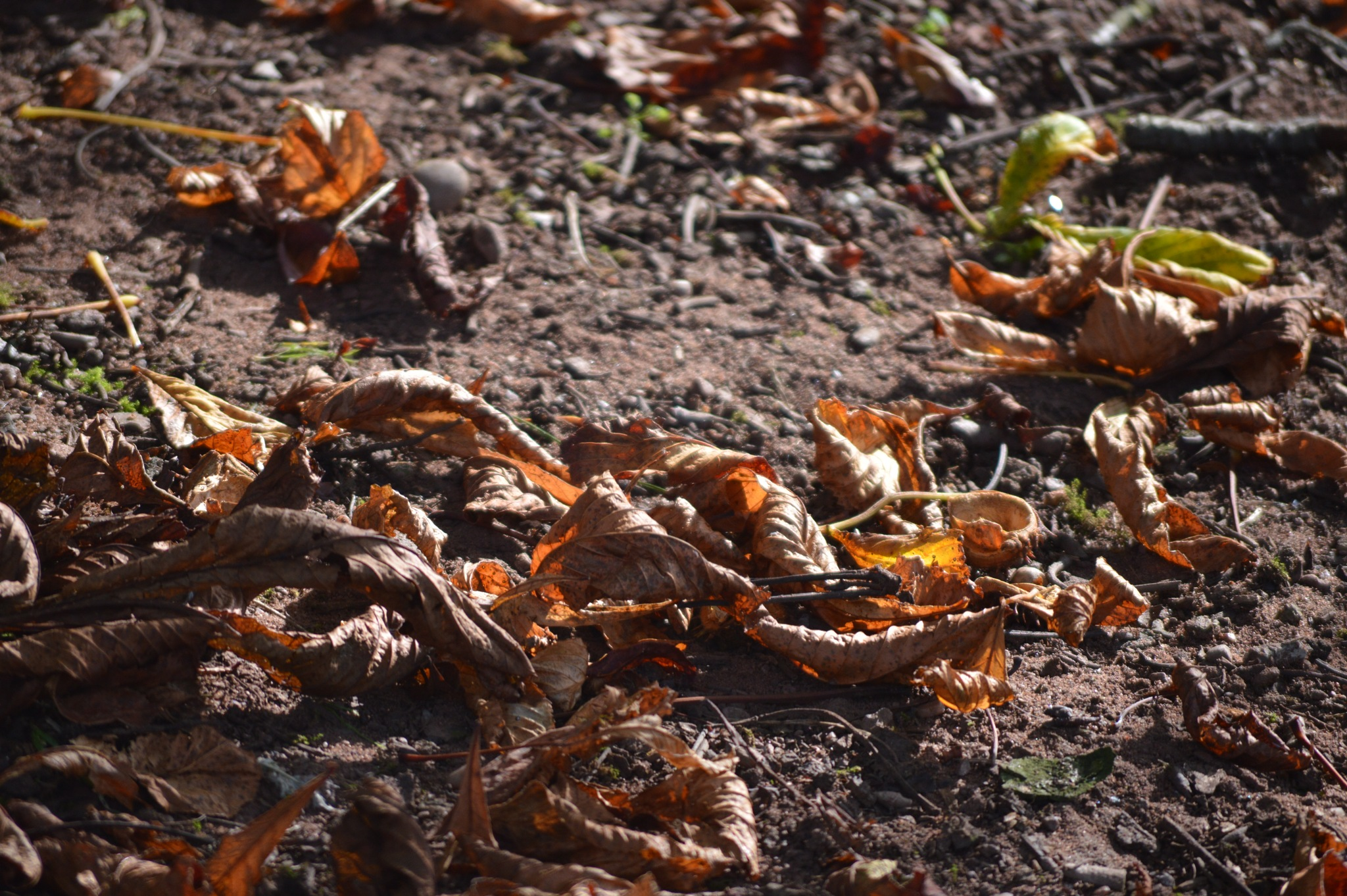the start of Autumn by adrian.williams.58323