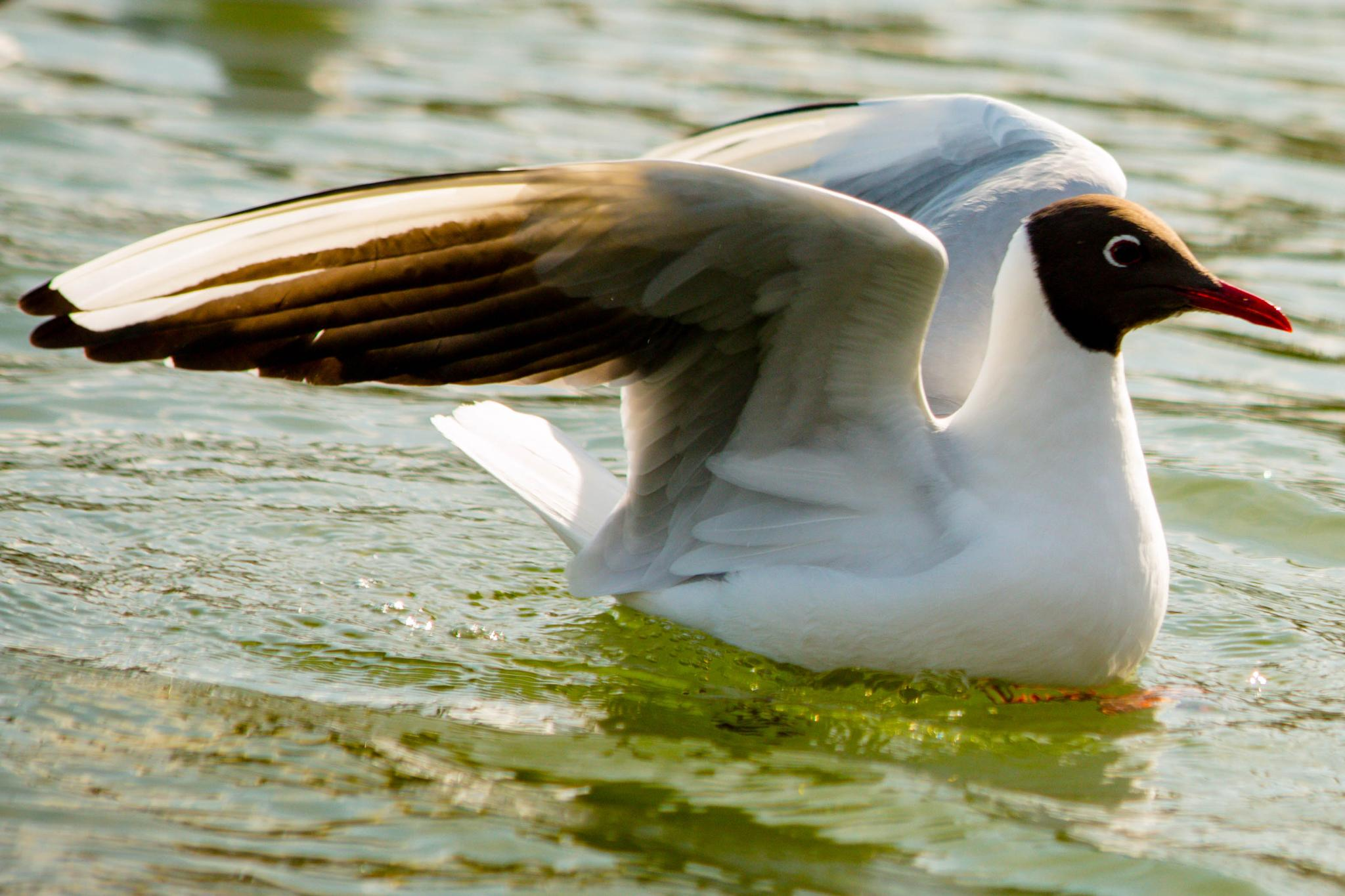 gull by Karina Eyre