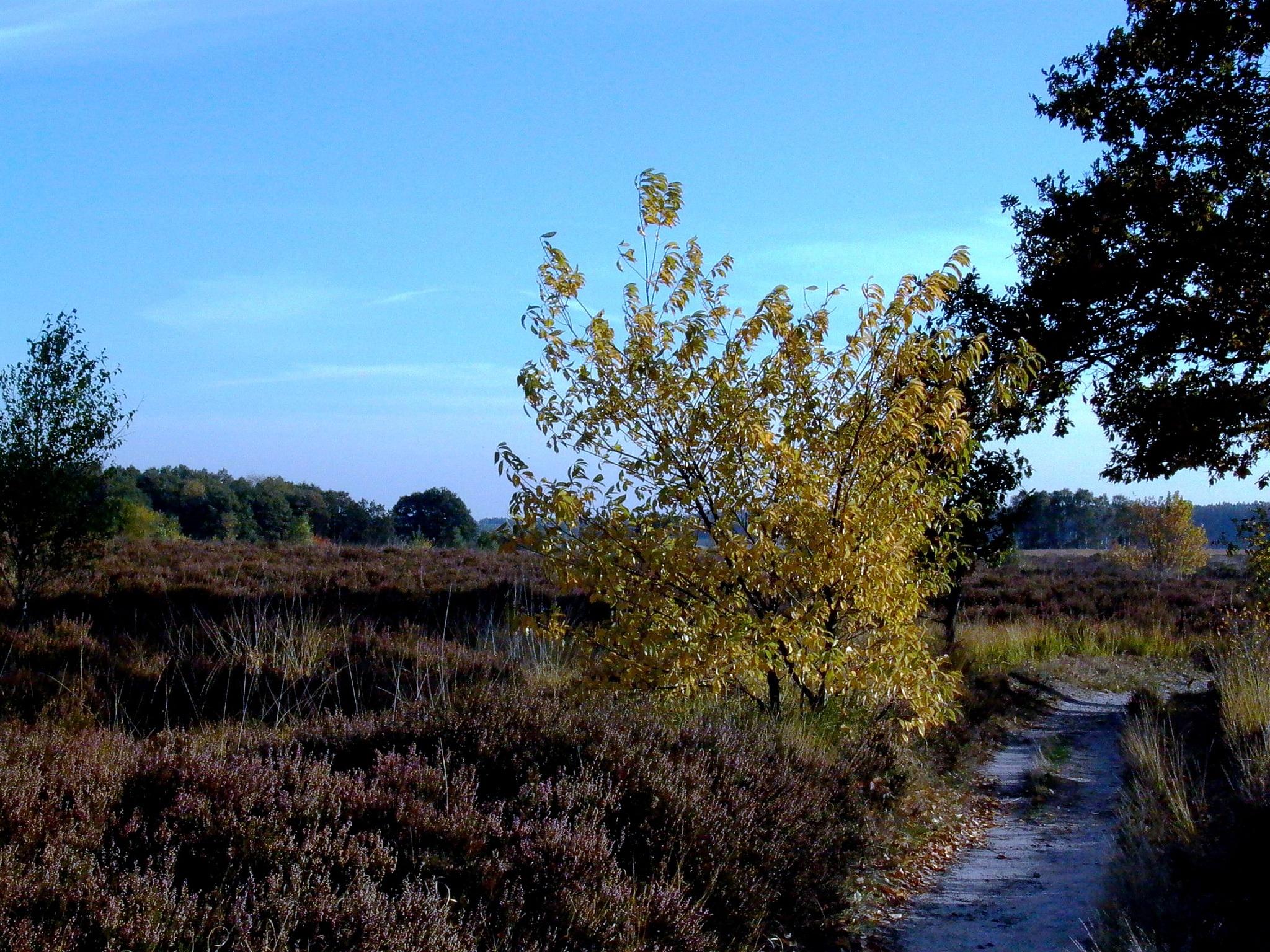Autumn walk  by leo.vleugels.3