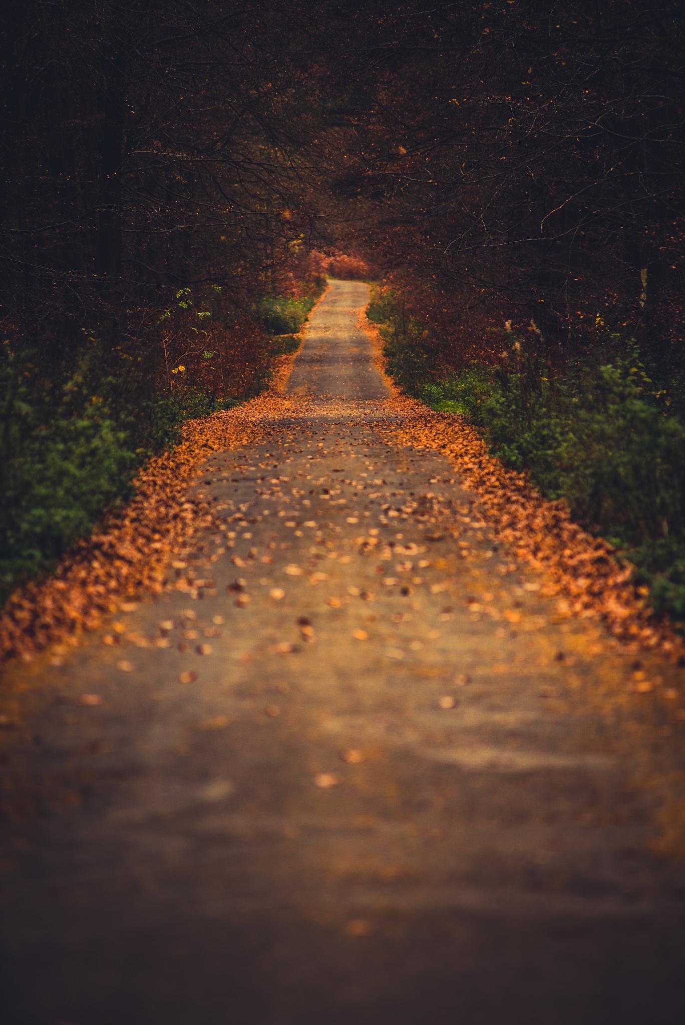 Herbstweg by Sebastian Fischer