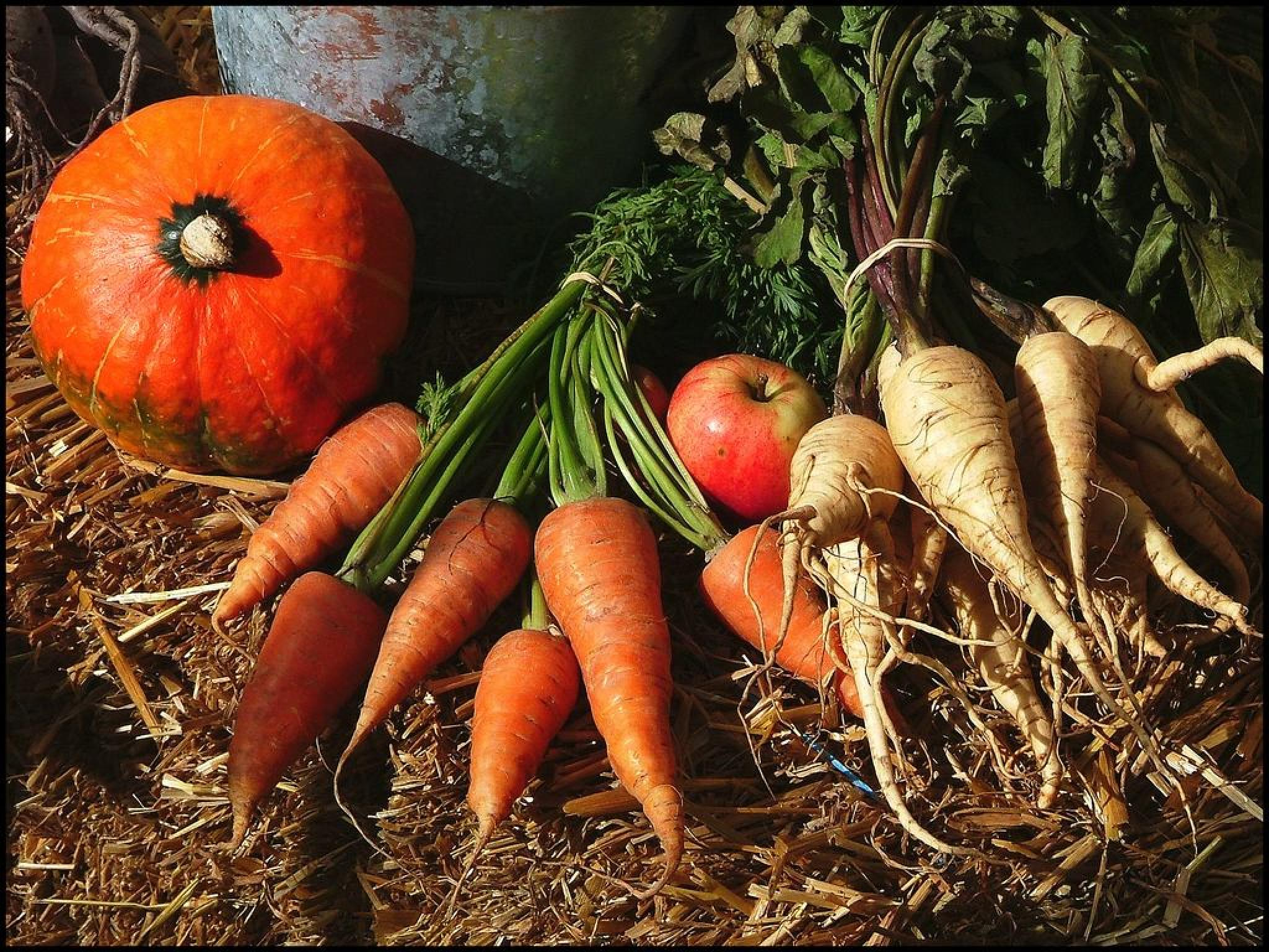 Harvest  by johannes.steingrimsson