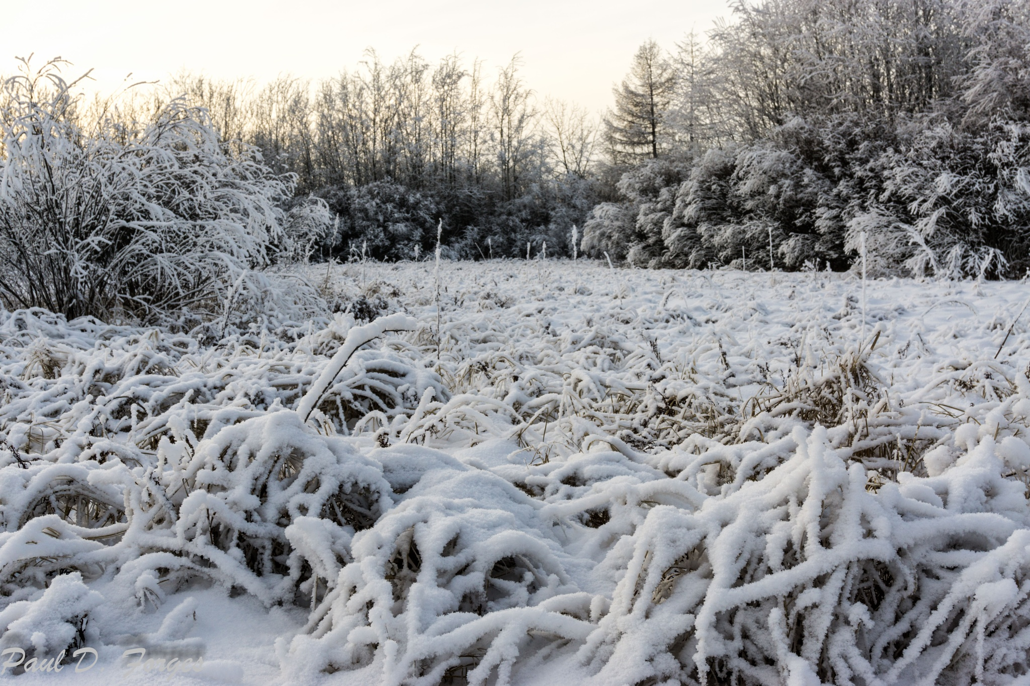 Winter Frost by paul.d.forges