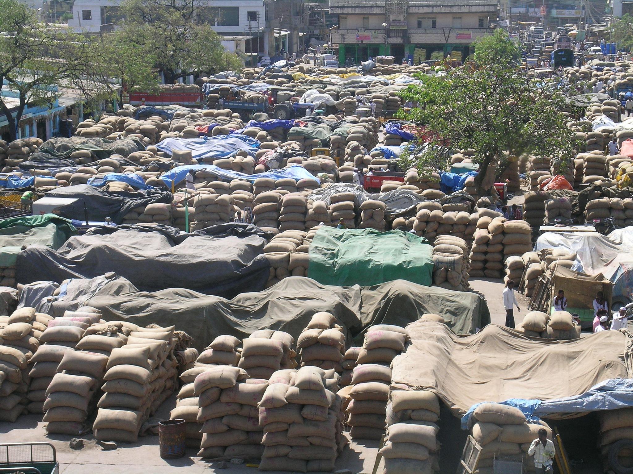seeds market  by Sharan Donnurkar