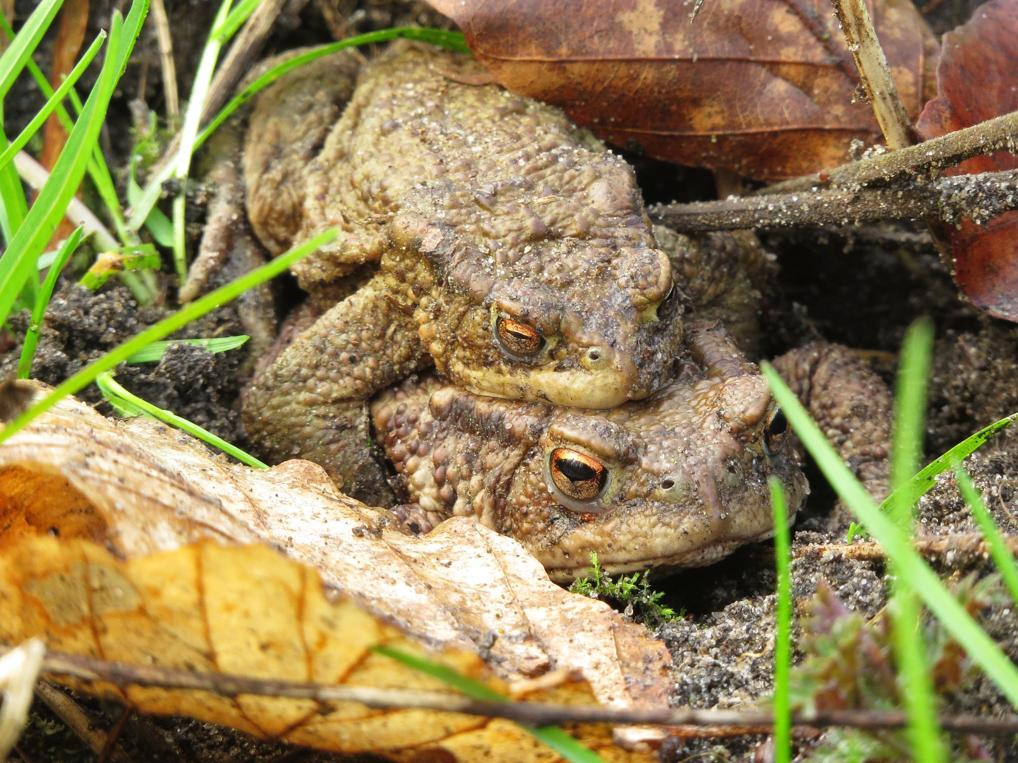 Toads by Rob Boon