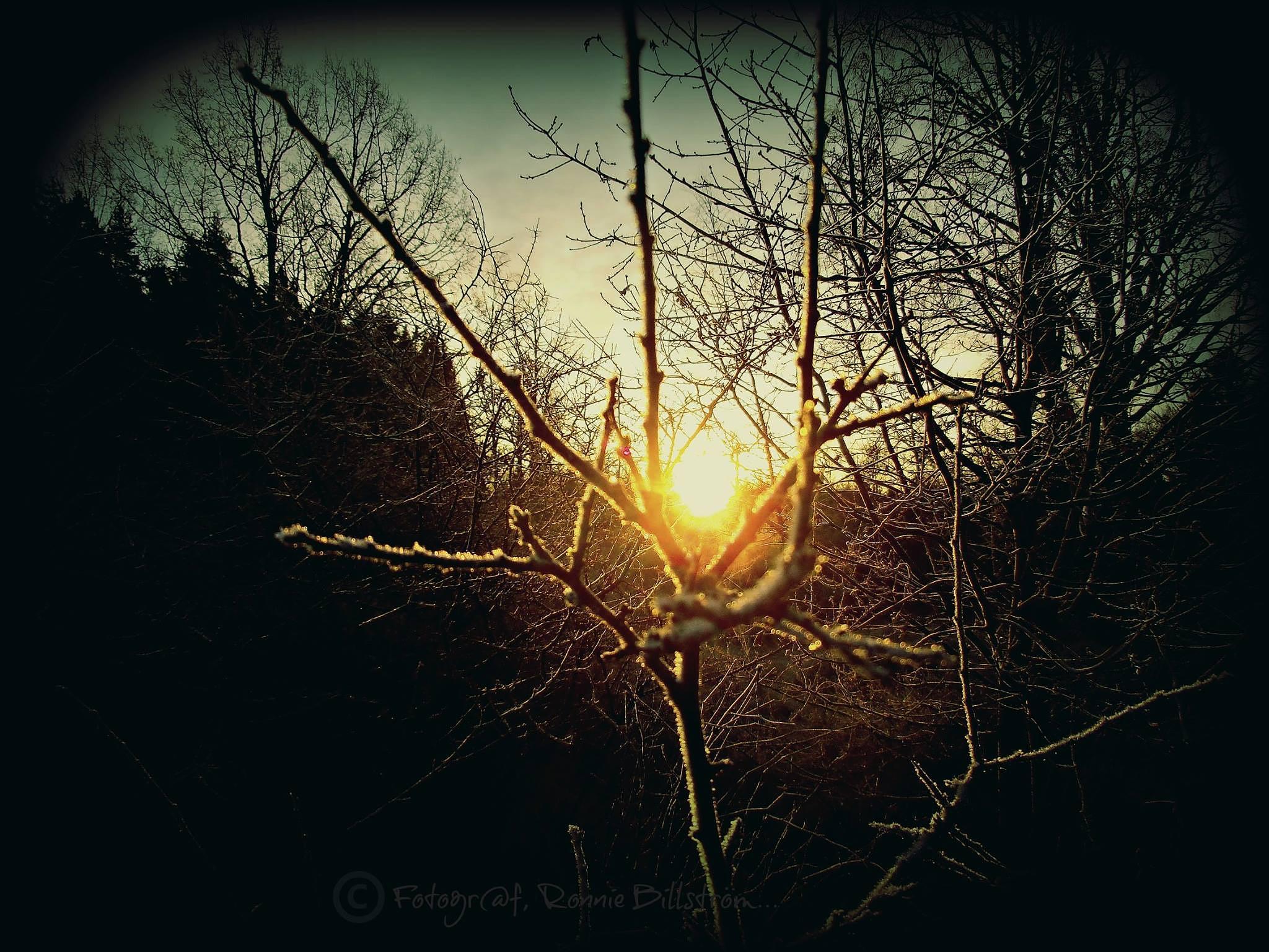 Morning Sun by ronnie.billstrom
