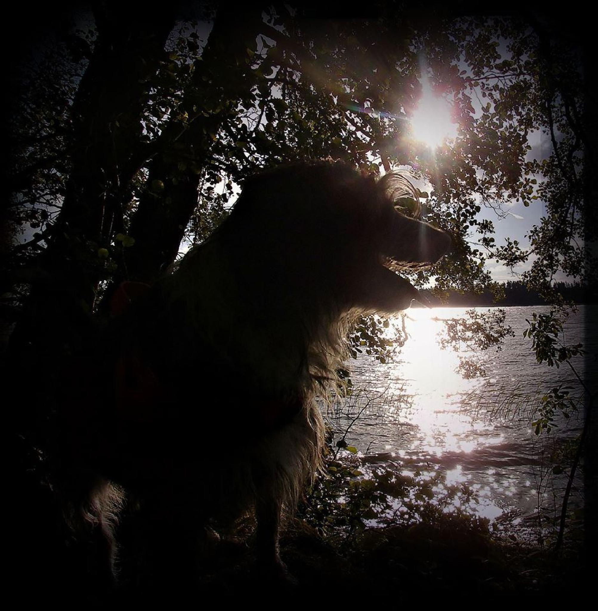 Enjoying the sun by ronnie.billstrom
