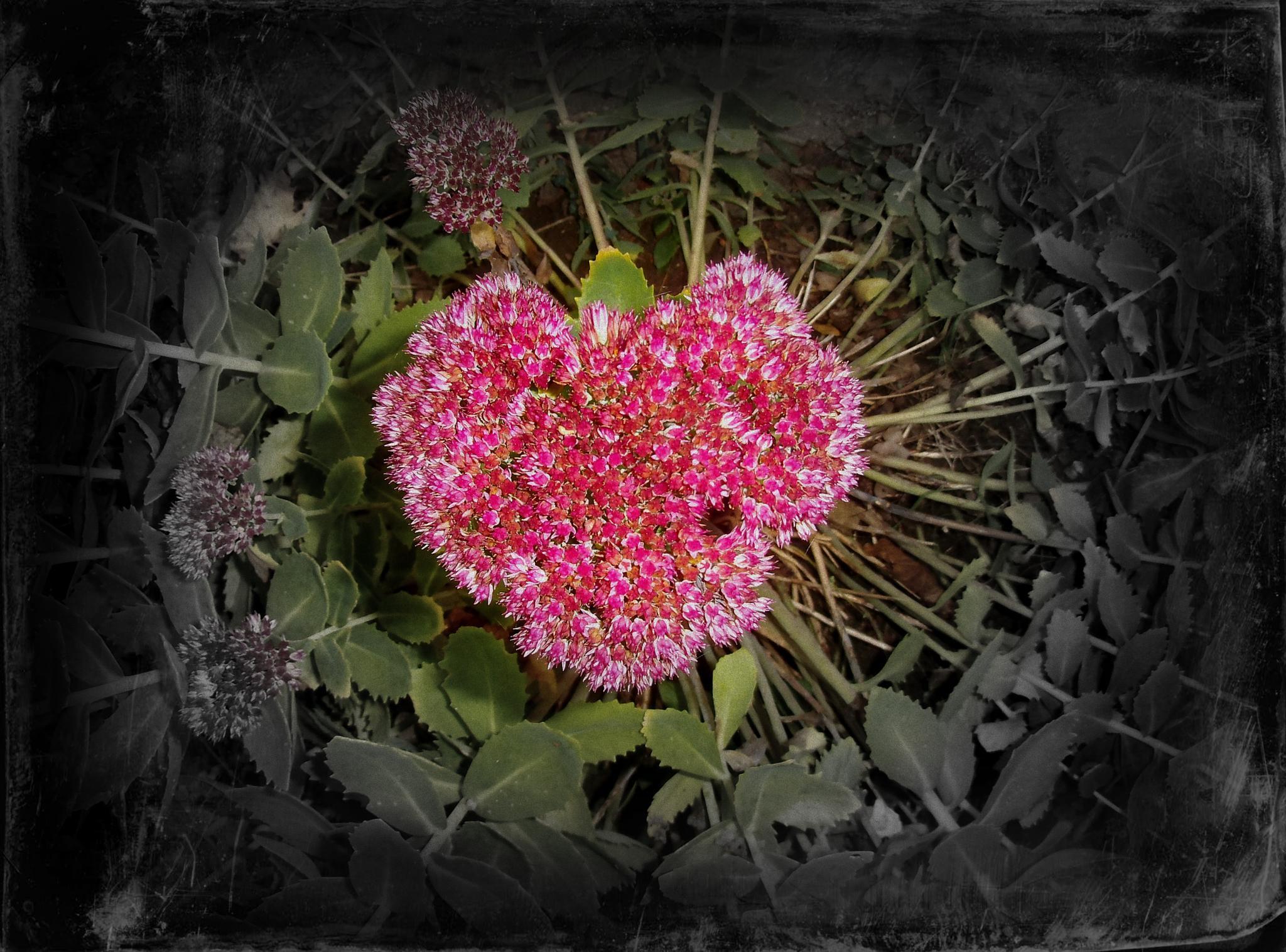 Flower of Love by ronnie.billstrom