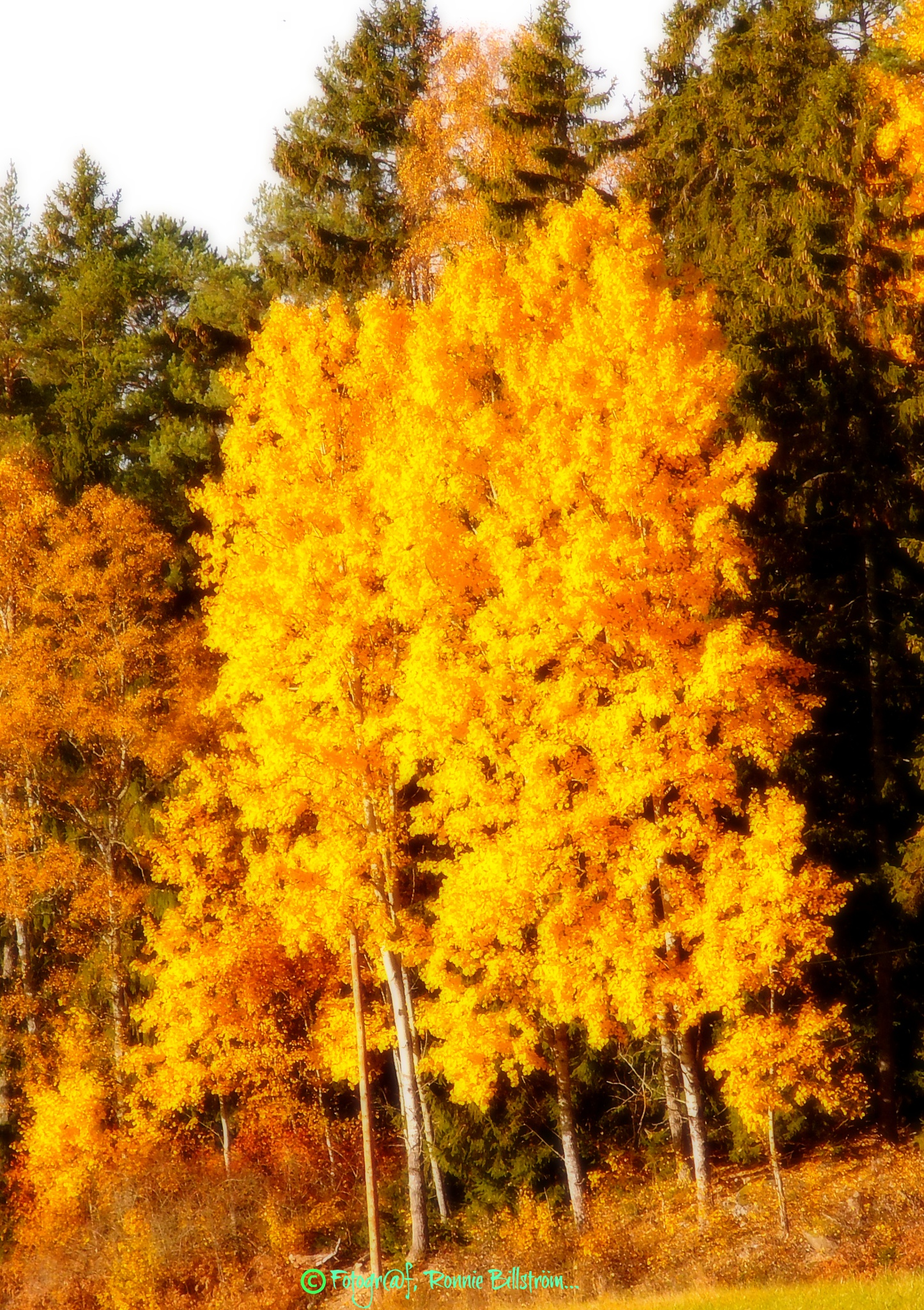 Autumn colors. by ronnie.billstrom