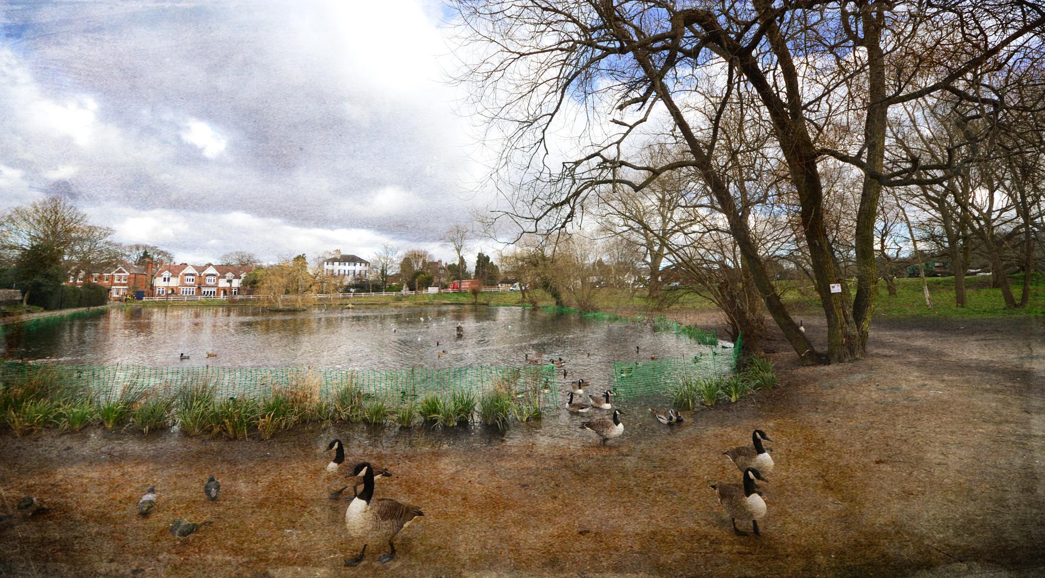 Chislehurst Pond by ValerieBakerPhotographer