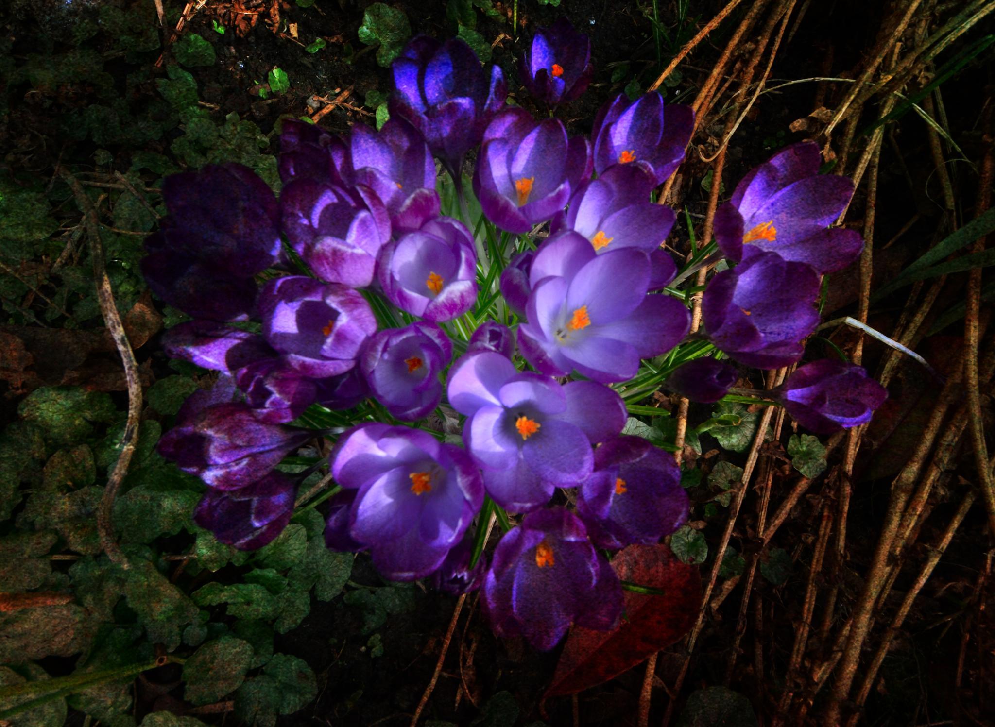 Flowers in my garden by ValerieBakerPhotographer