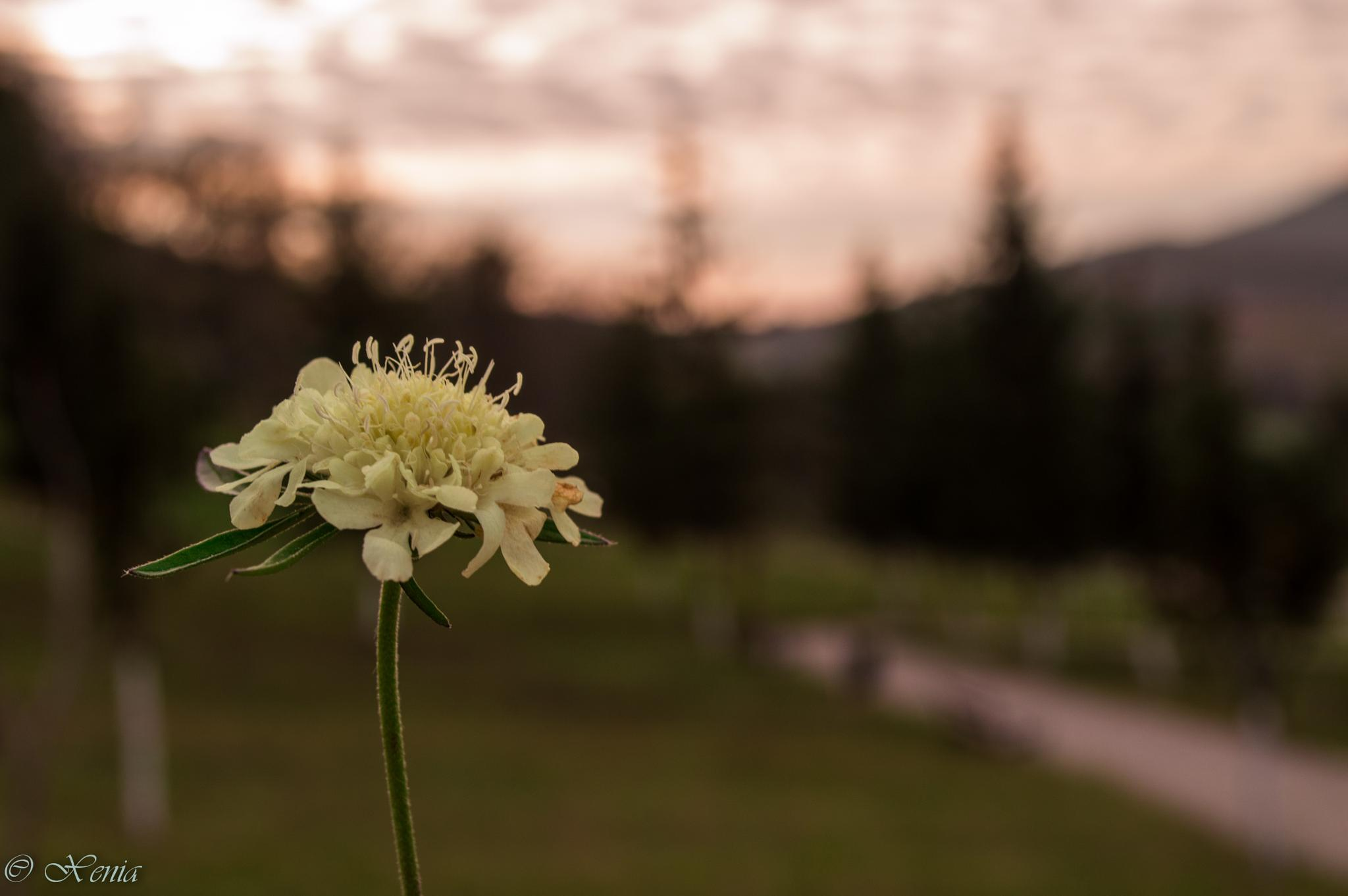 Little flower by xenia.catalina.1