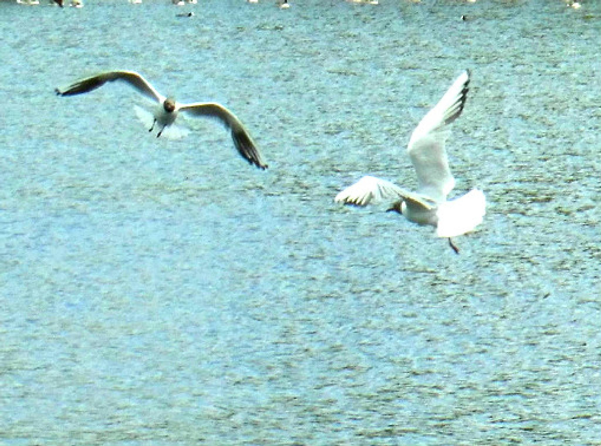 aerial battle by adrian pendlebury