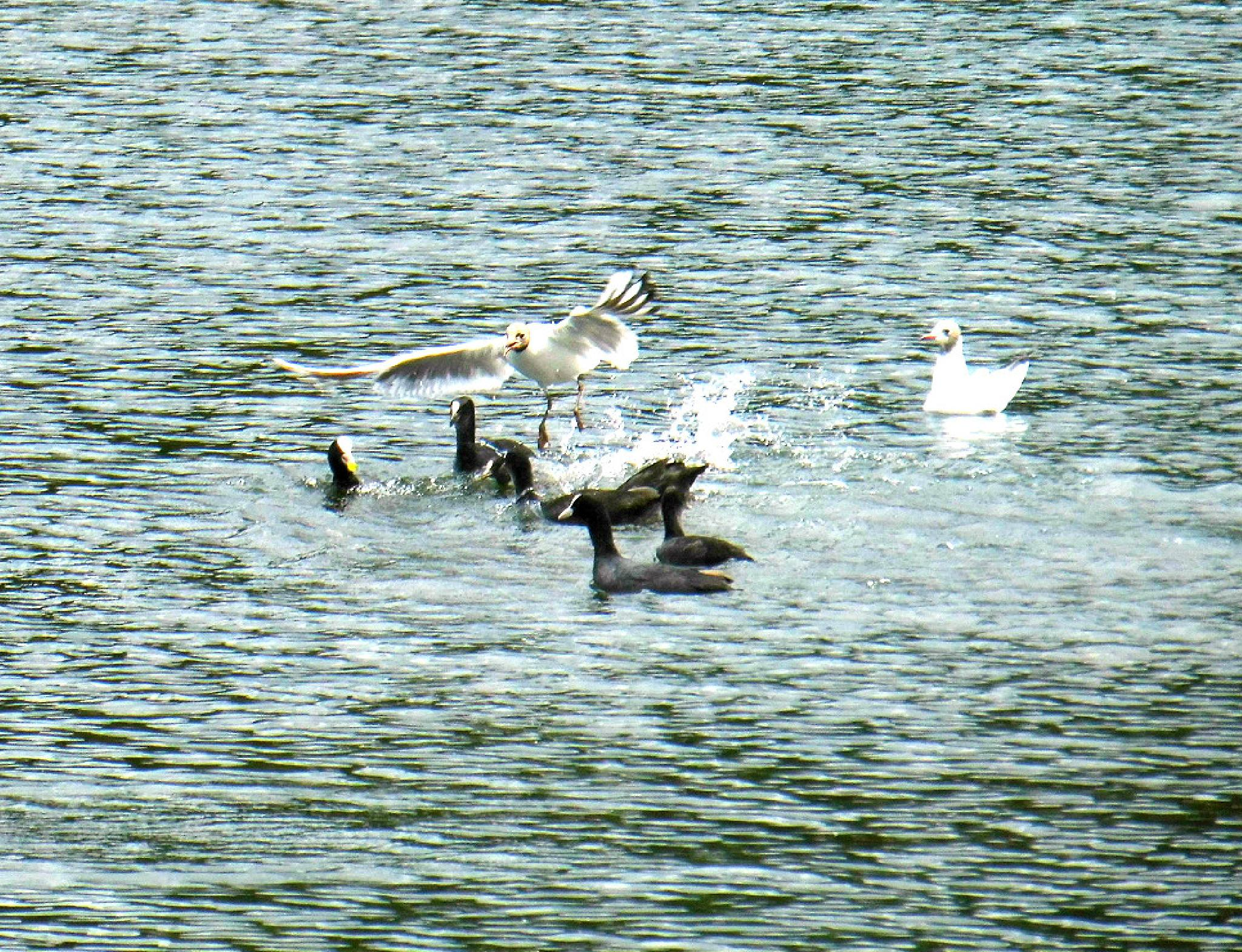 landing by adrian pendlebury